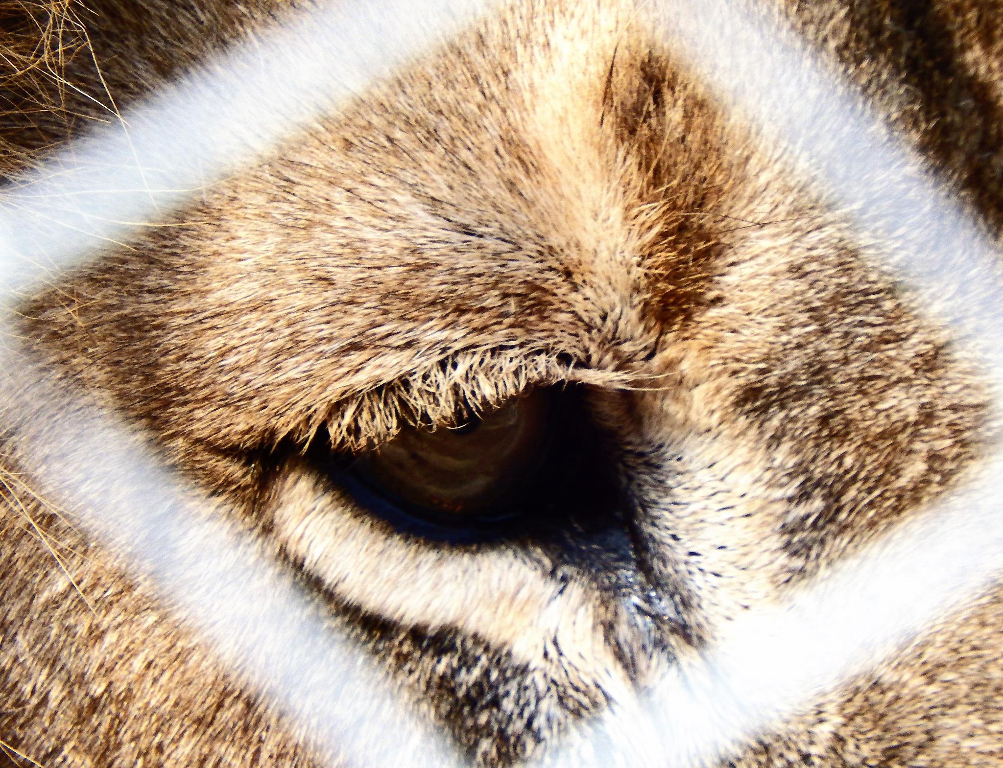 Lion's eye close up (2). by Japie van der Berg
