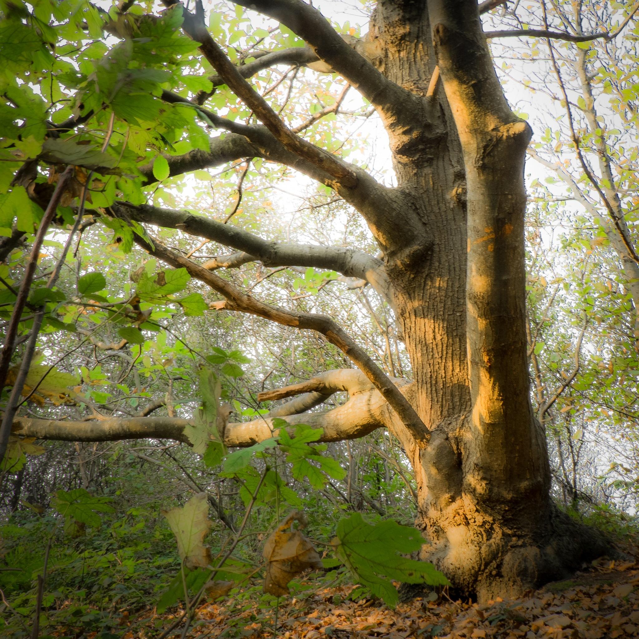 L'arbre by Brigitte SANEGRE