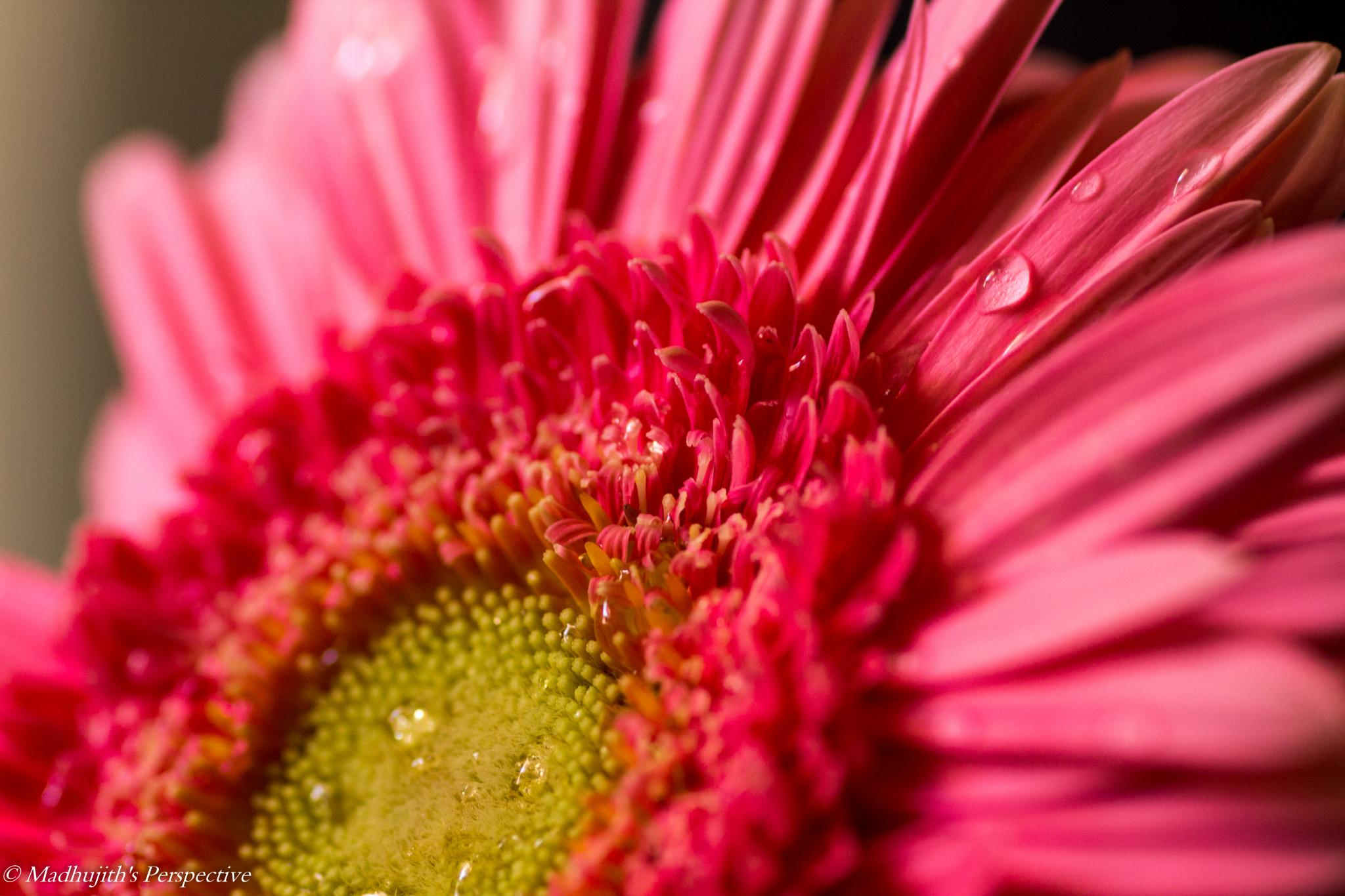 Drops of freshness by madhujith