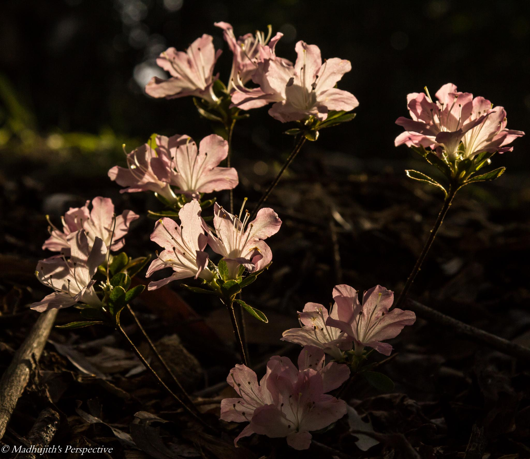 When the Light Shines by madhujith