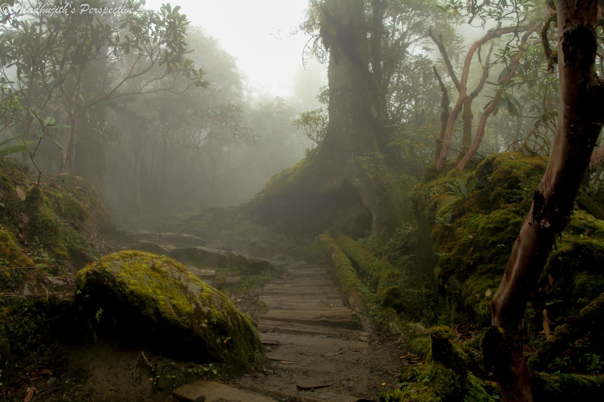 The Mysterious Road by madhujith