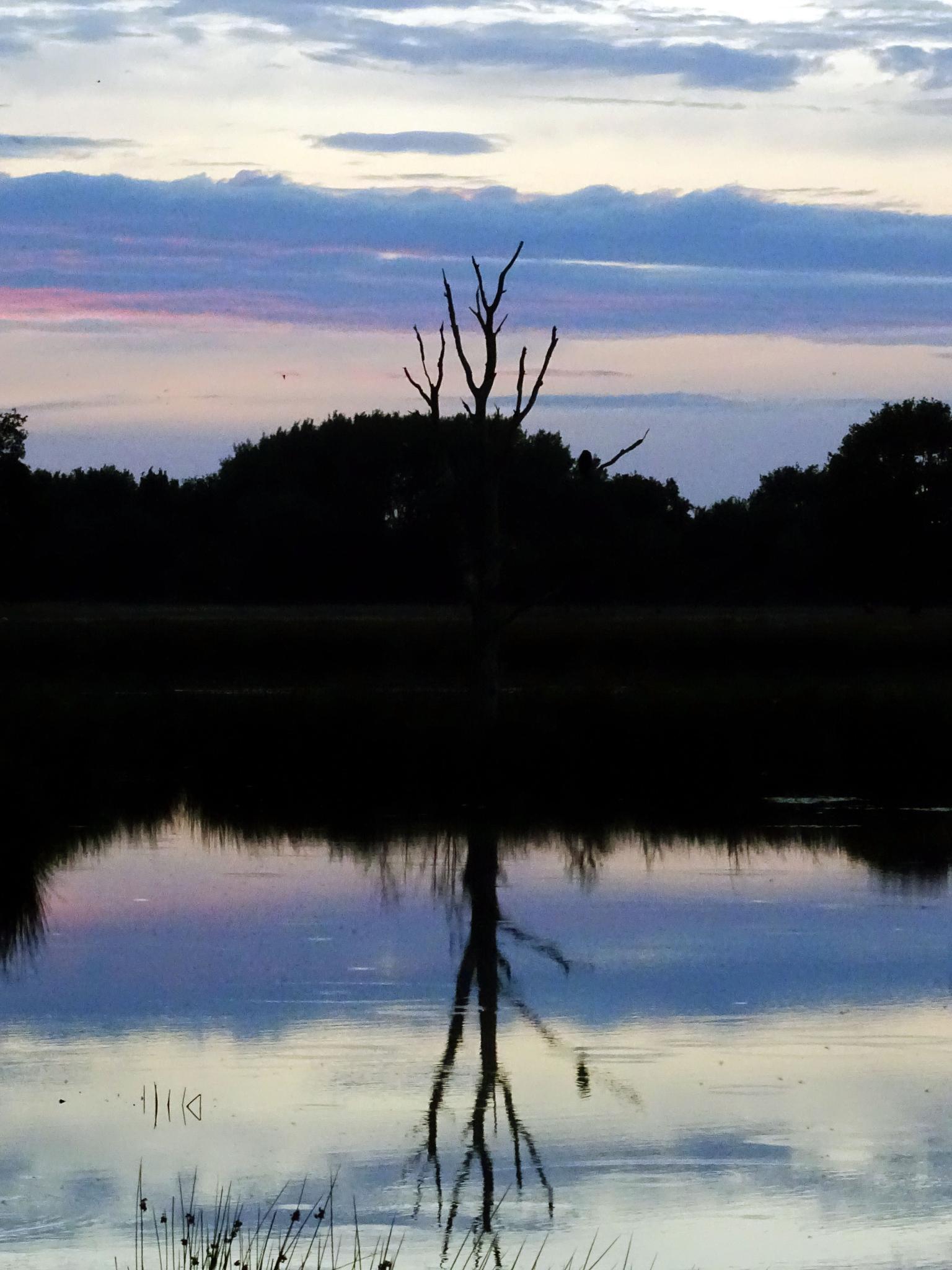 Reflection of a tree by missjoy86