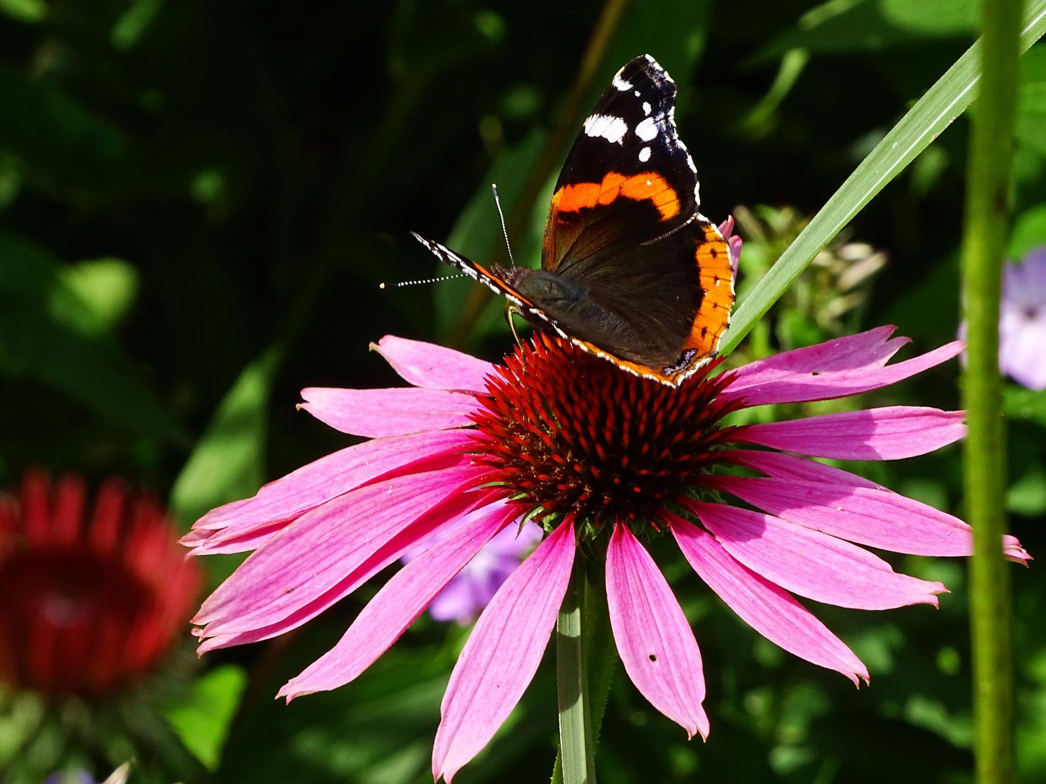 Butterfly by missjoy86