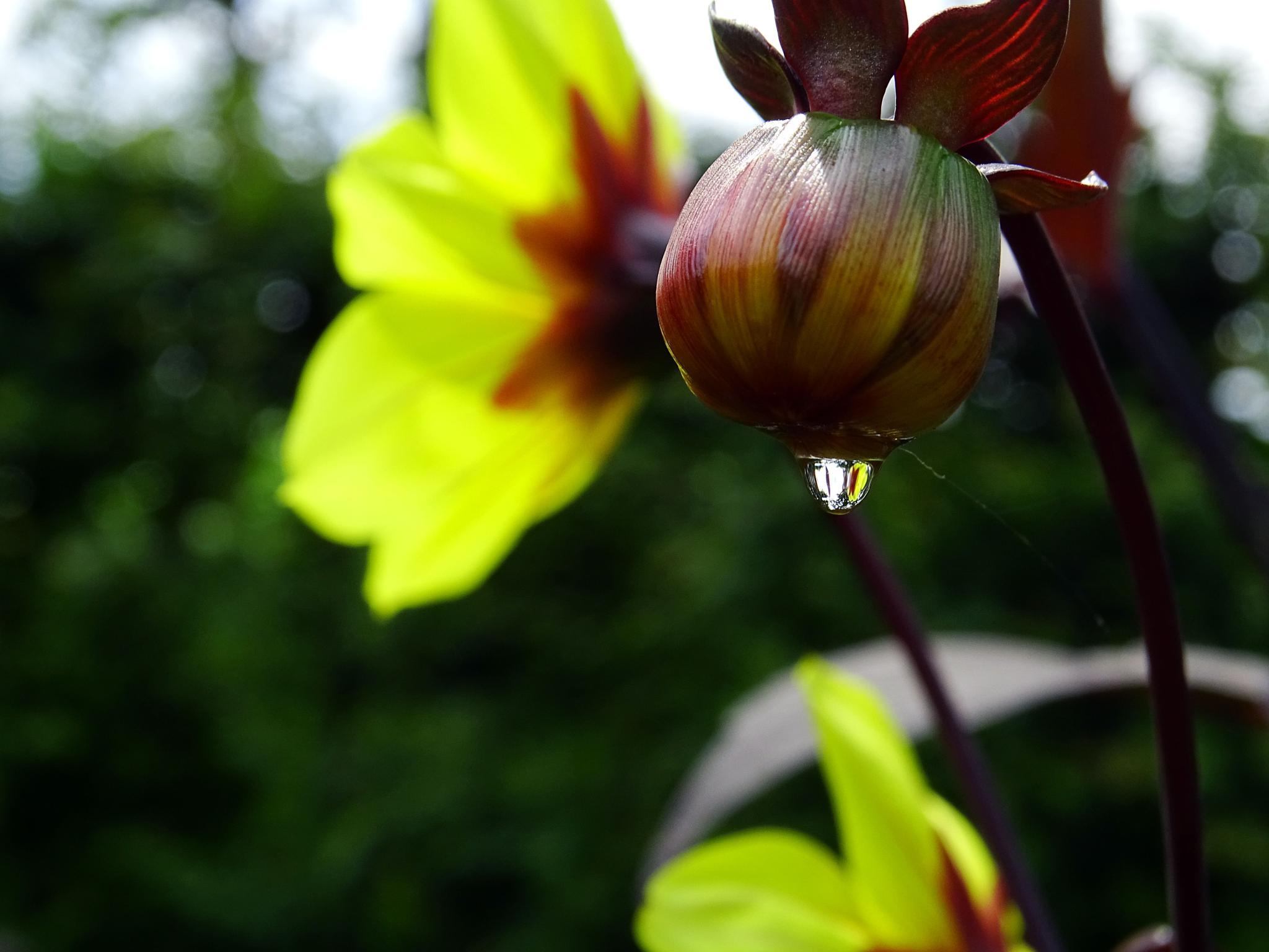 Raindrop by missjoy86