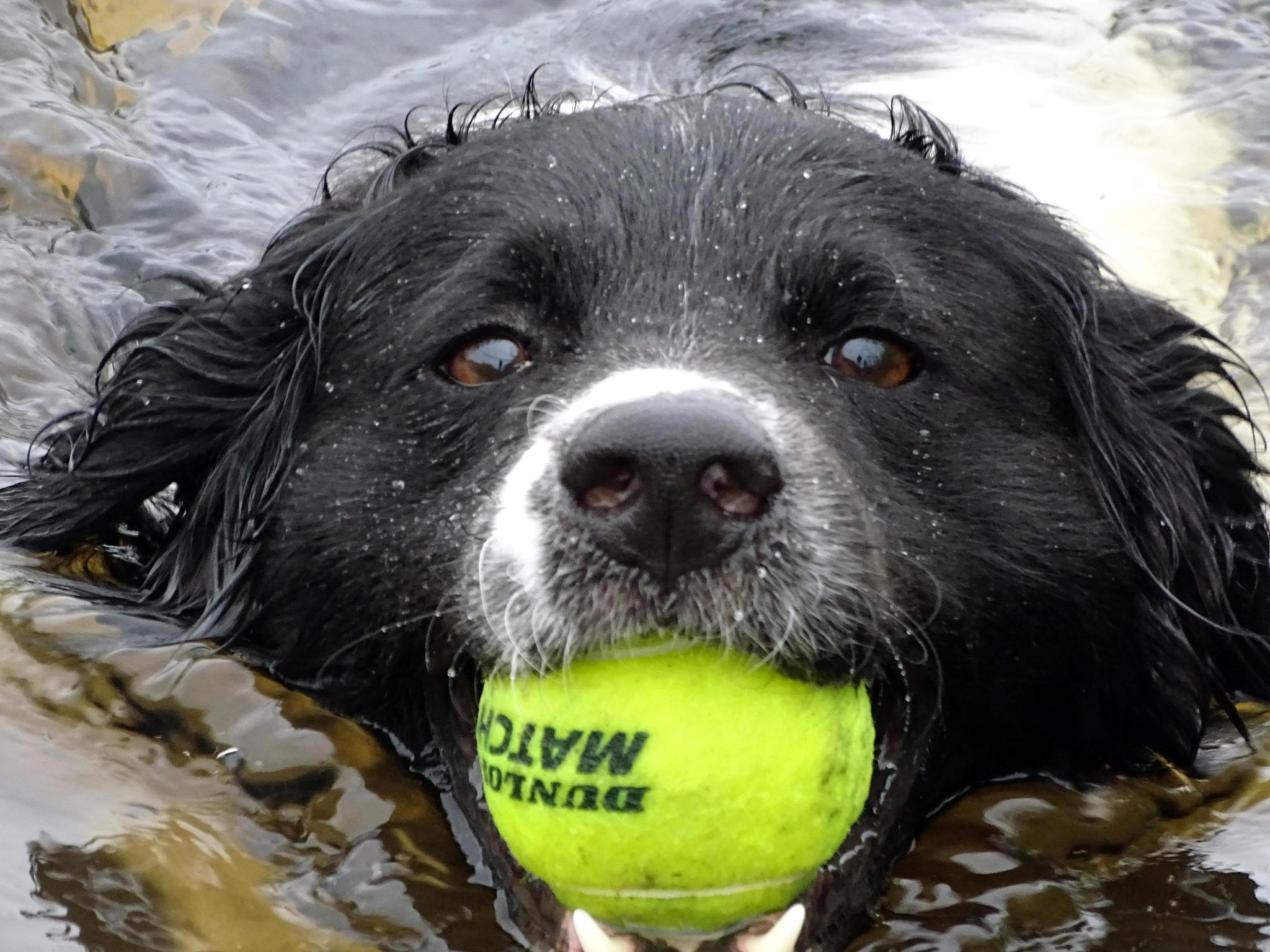 Swimming dog by missjoy86
