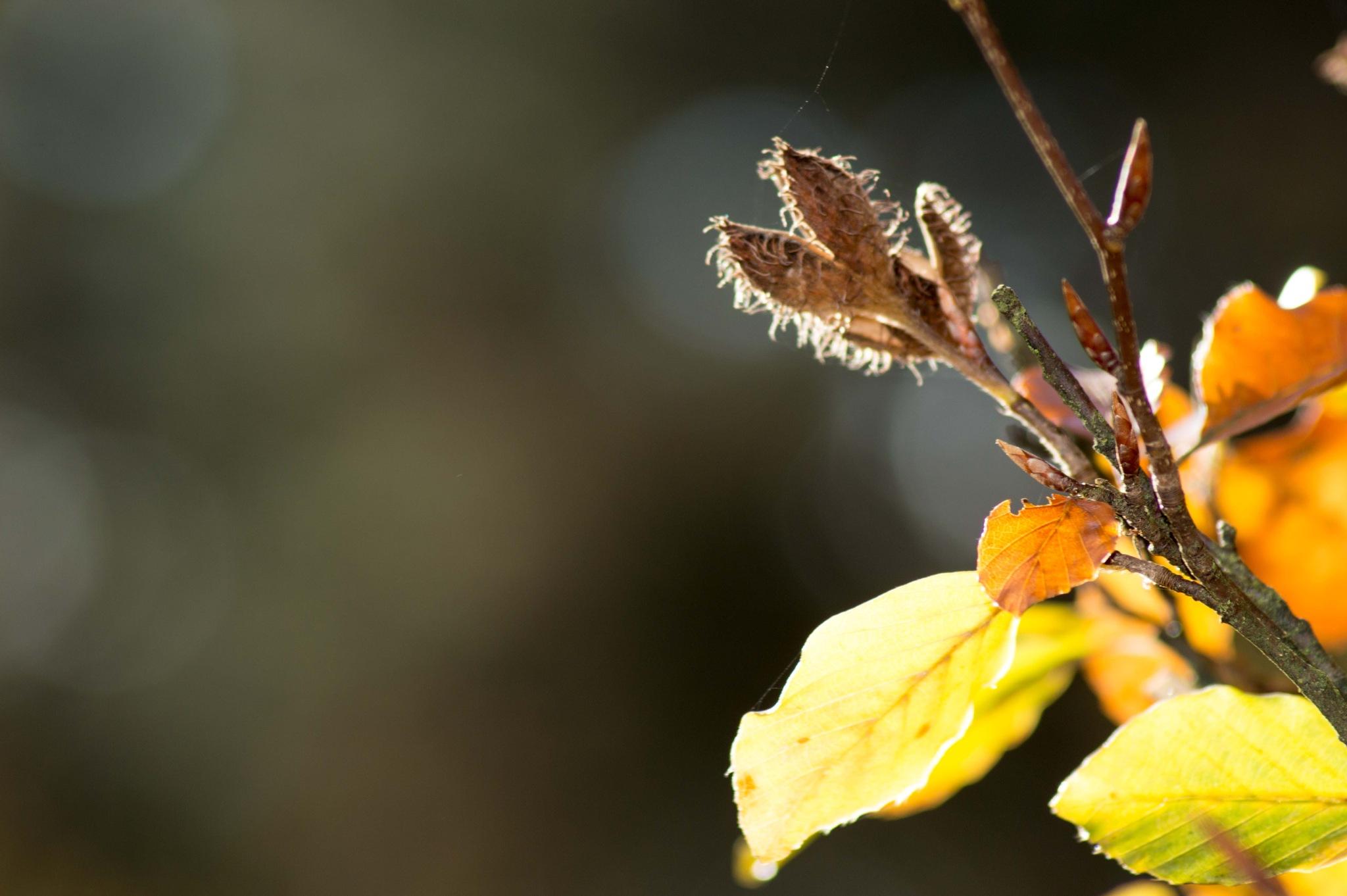 autumn leaf by missjoy86