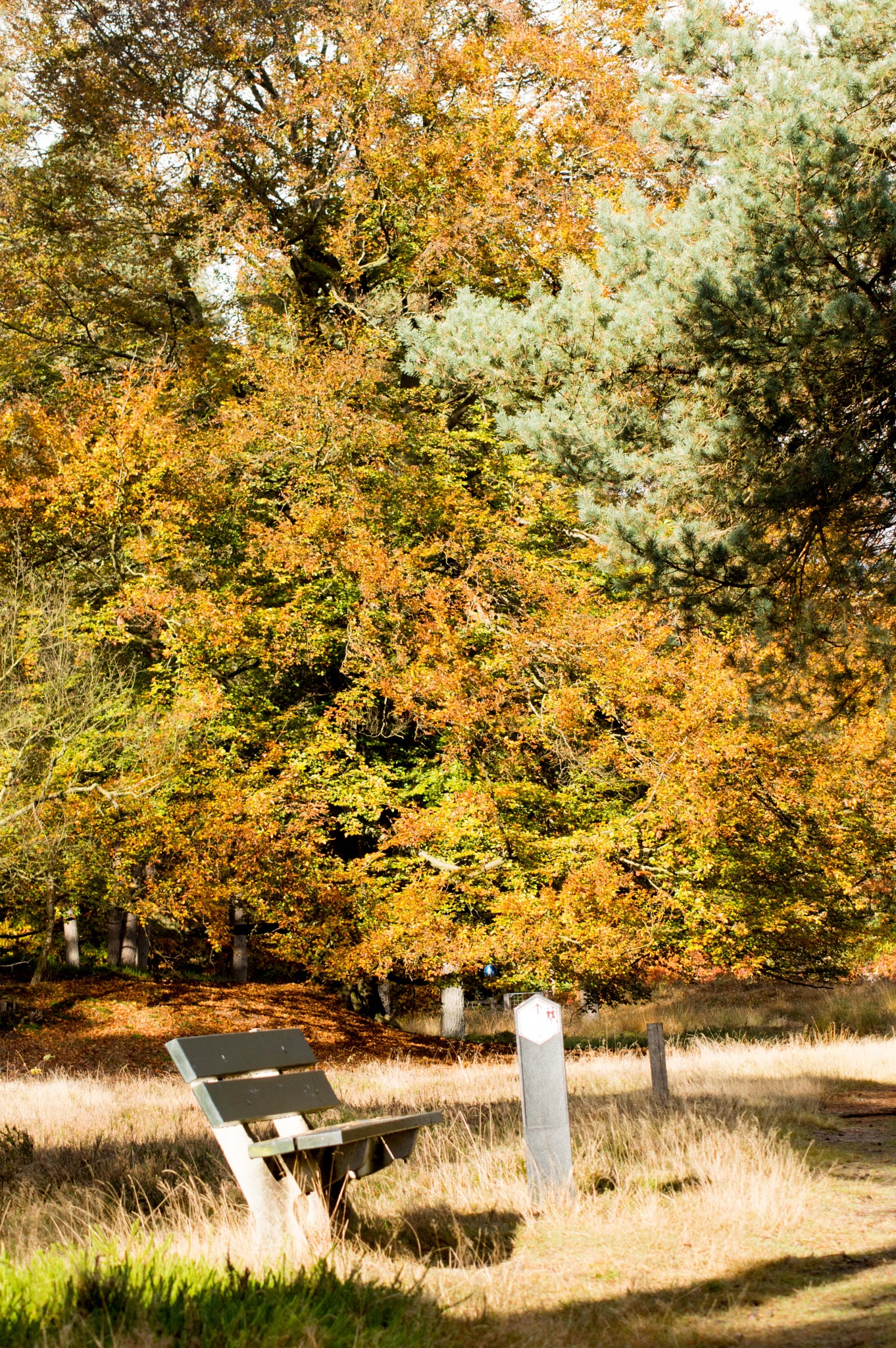 Autumn tree by missjoy86