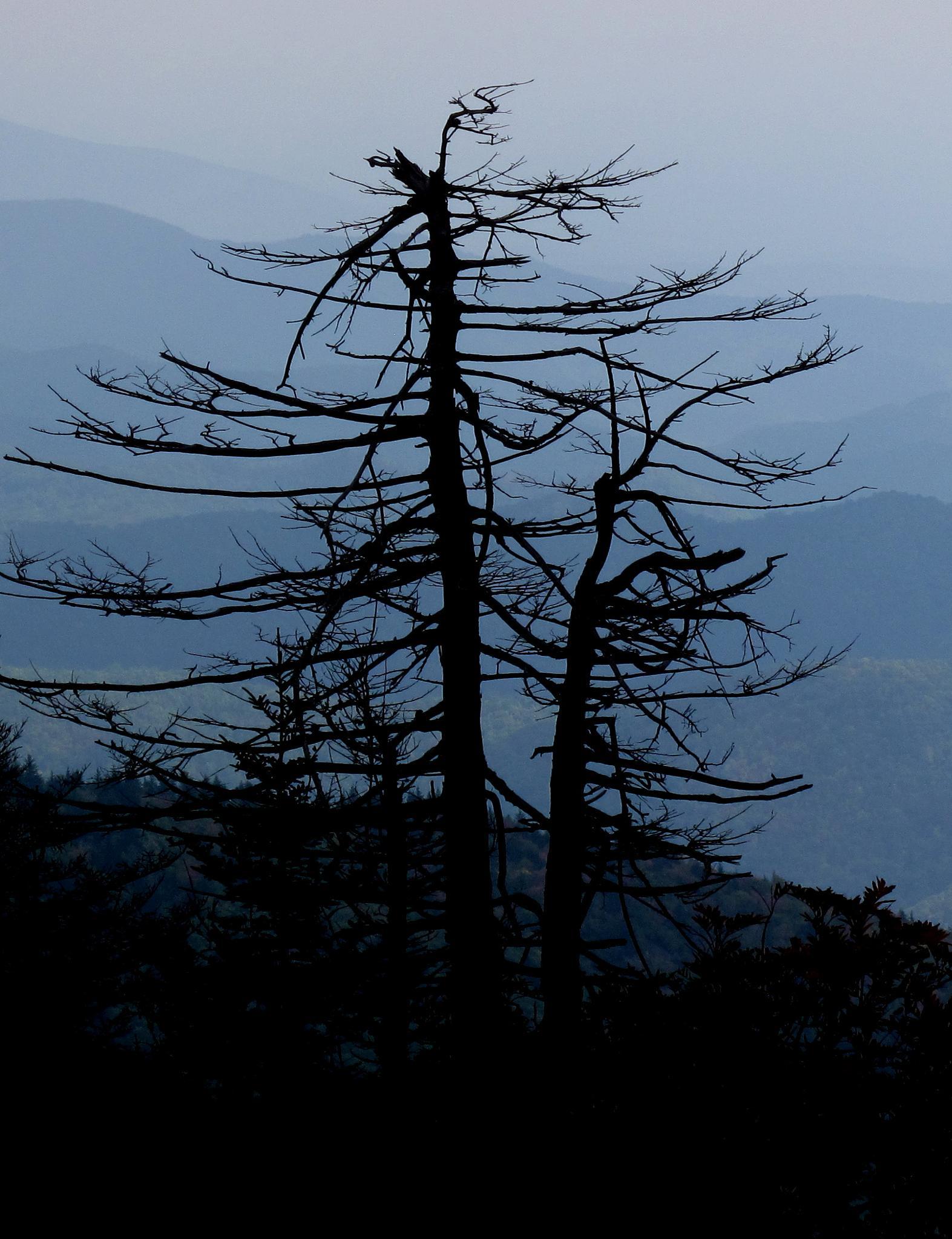 2 dead trees in heaven by TatyanaNagel