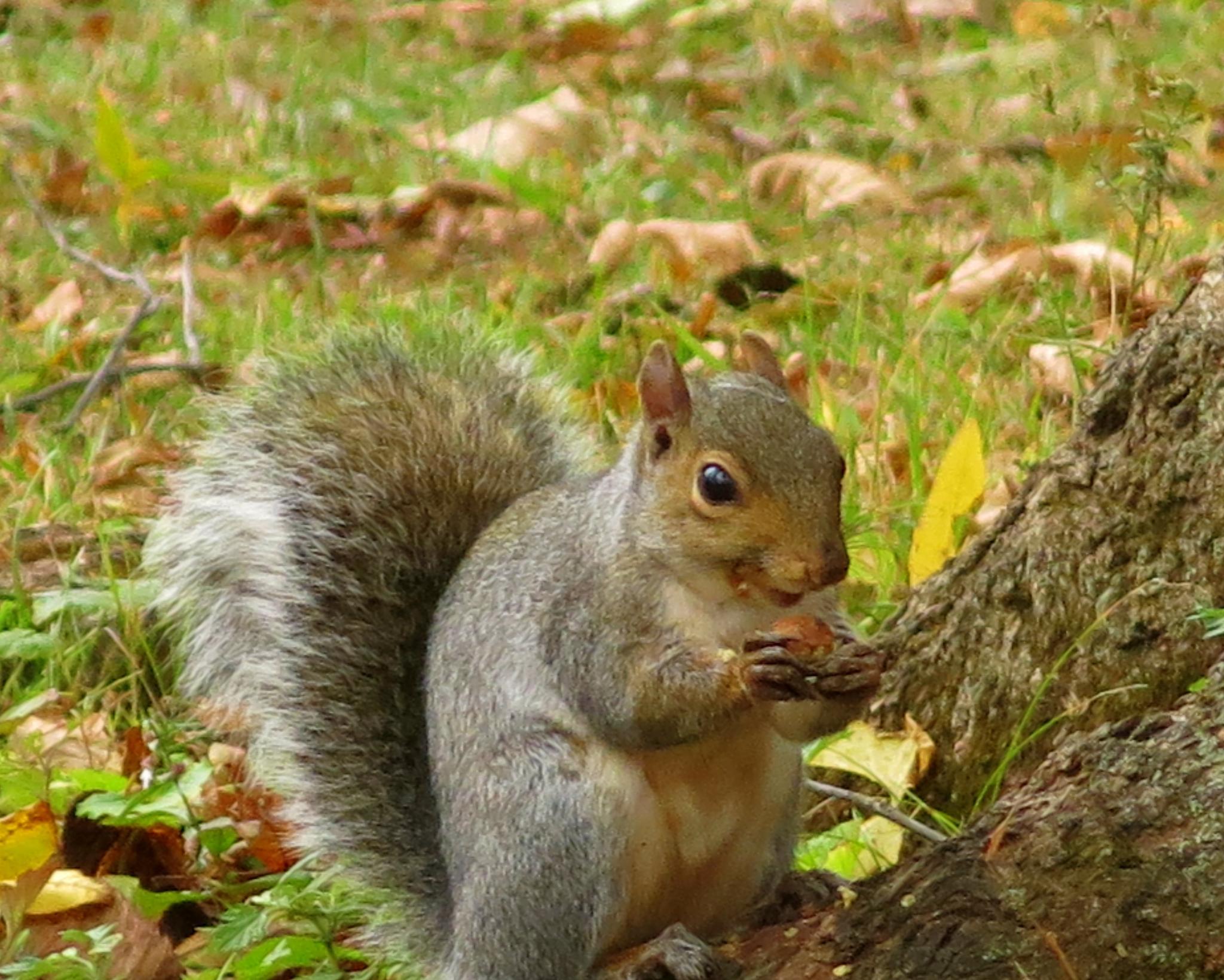 Photo in Animal #squrel #leaves #grass