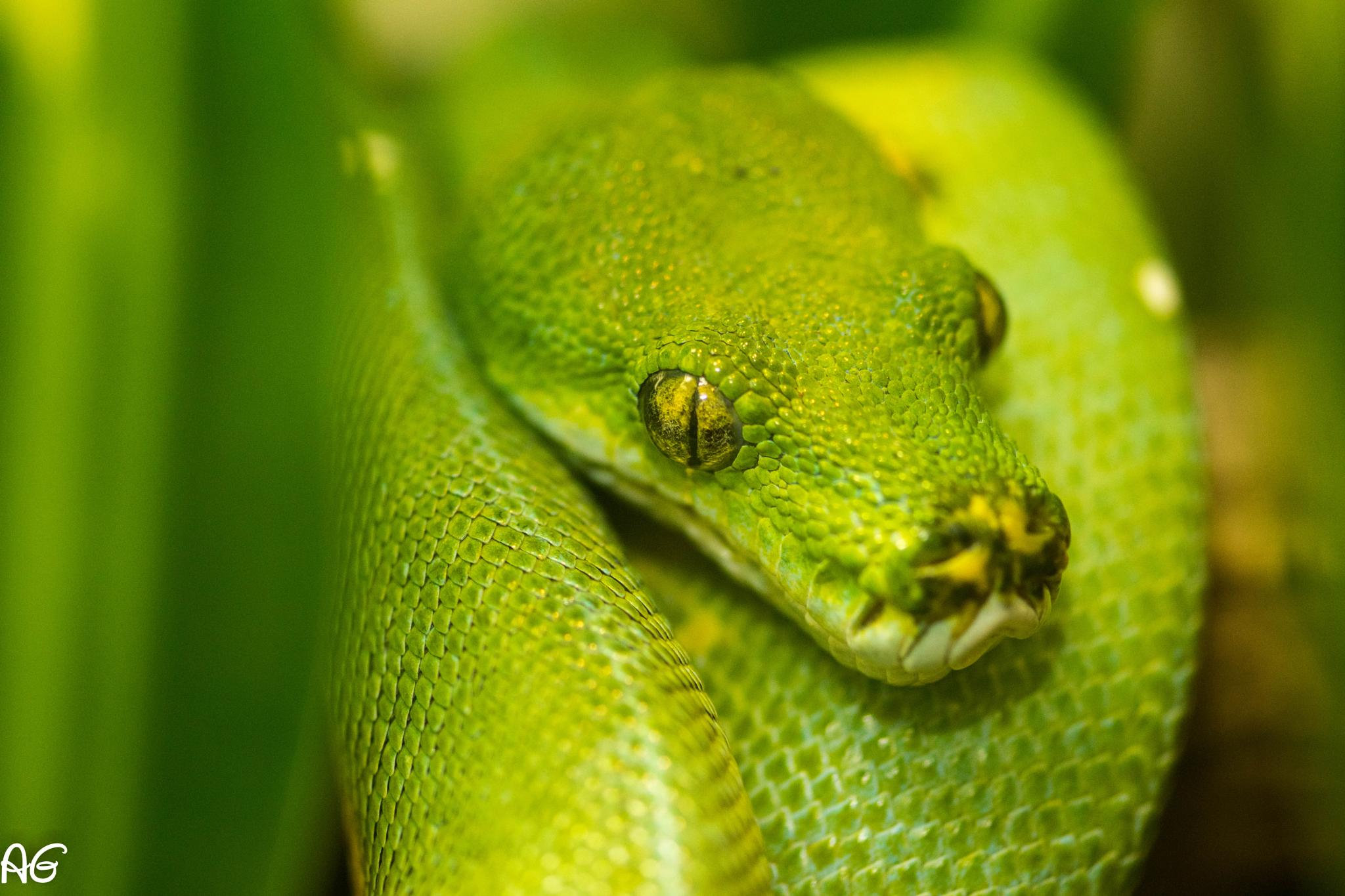 Snake by Andy Ghosh
