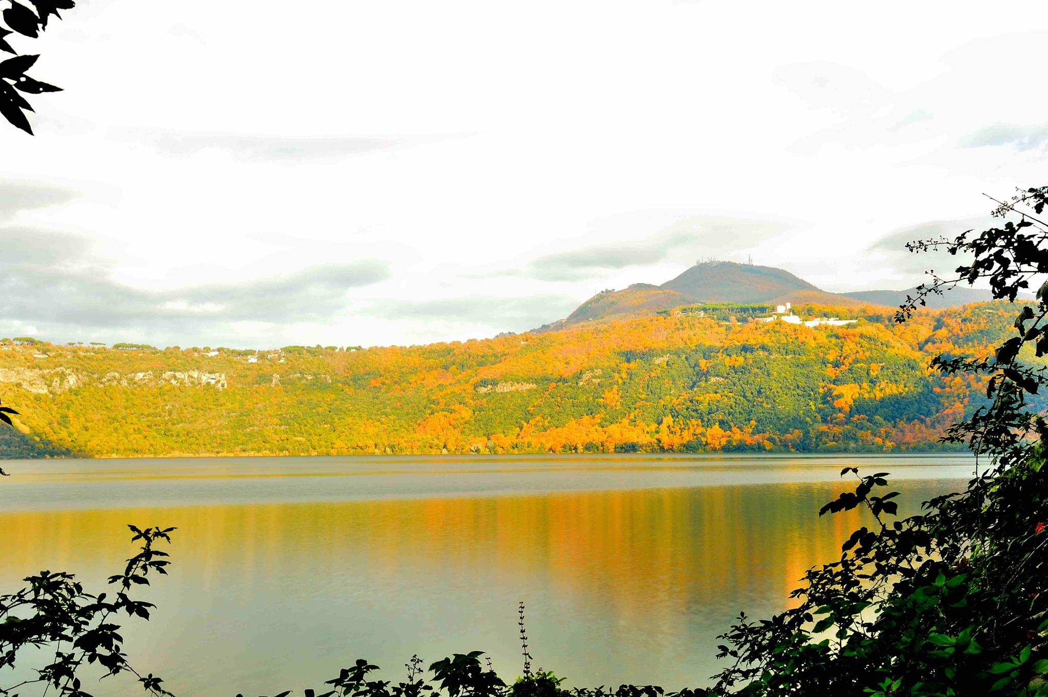 yellow autumn in the lake by Dino Almonac
