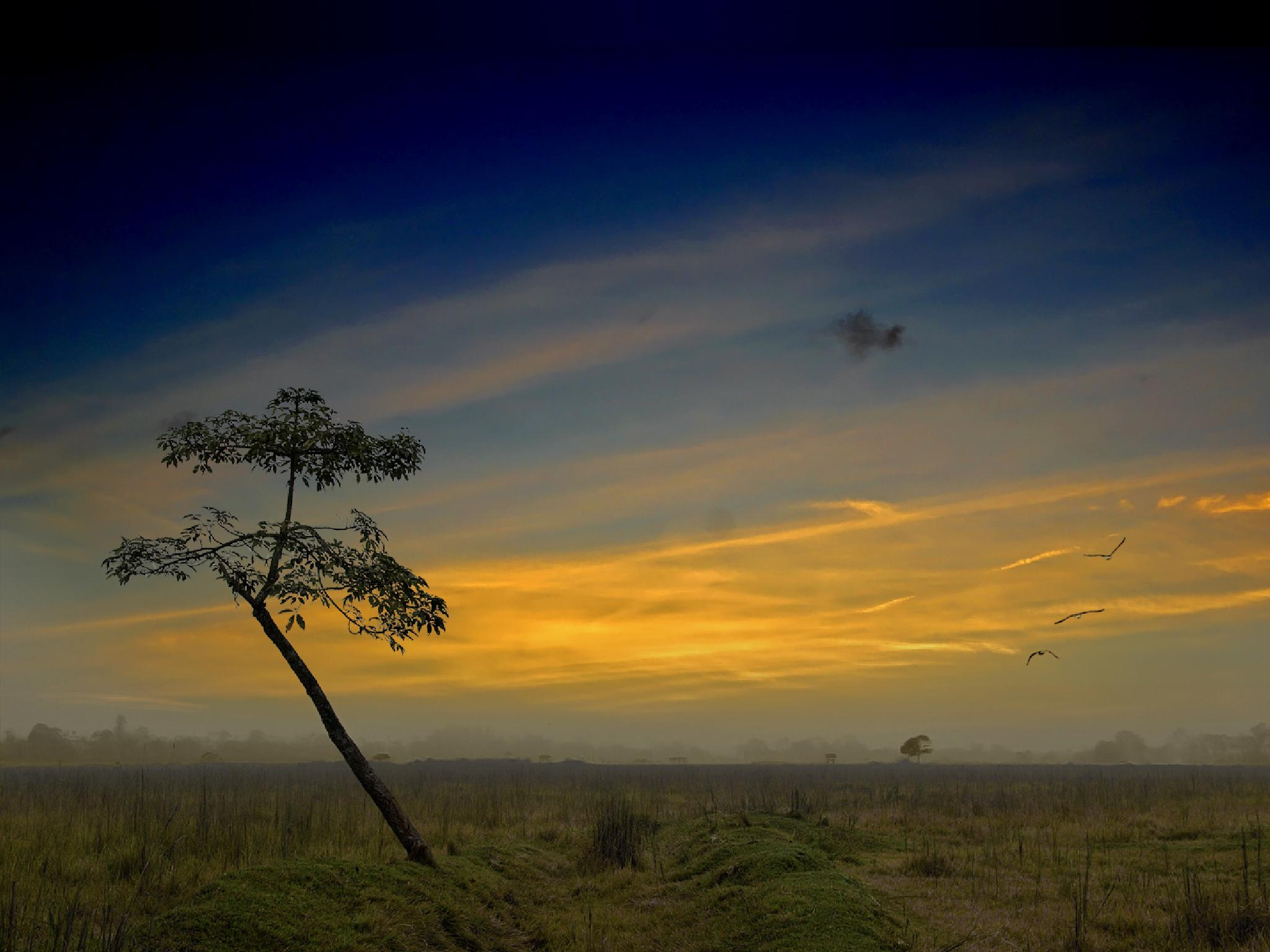 Lonesome Tree by kalibrahim