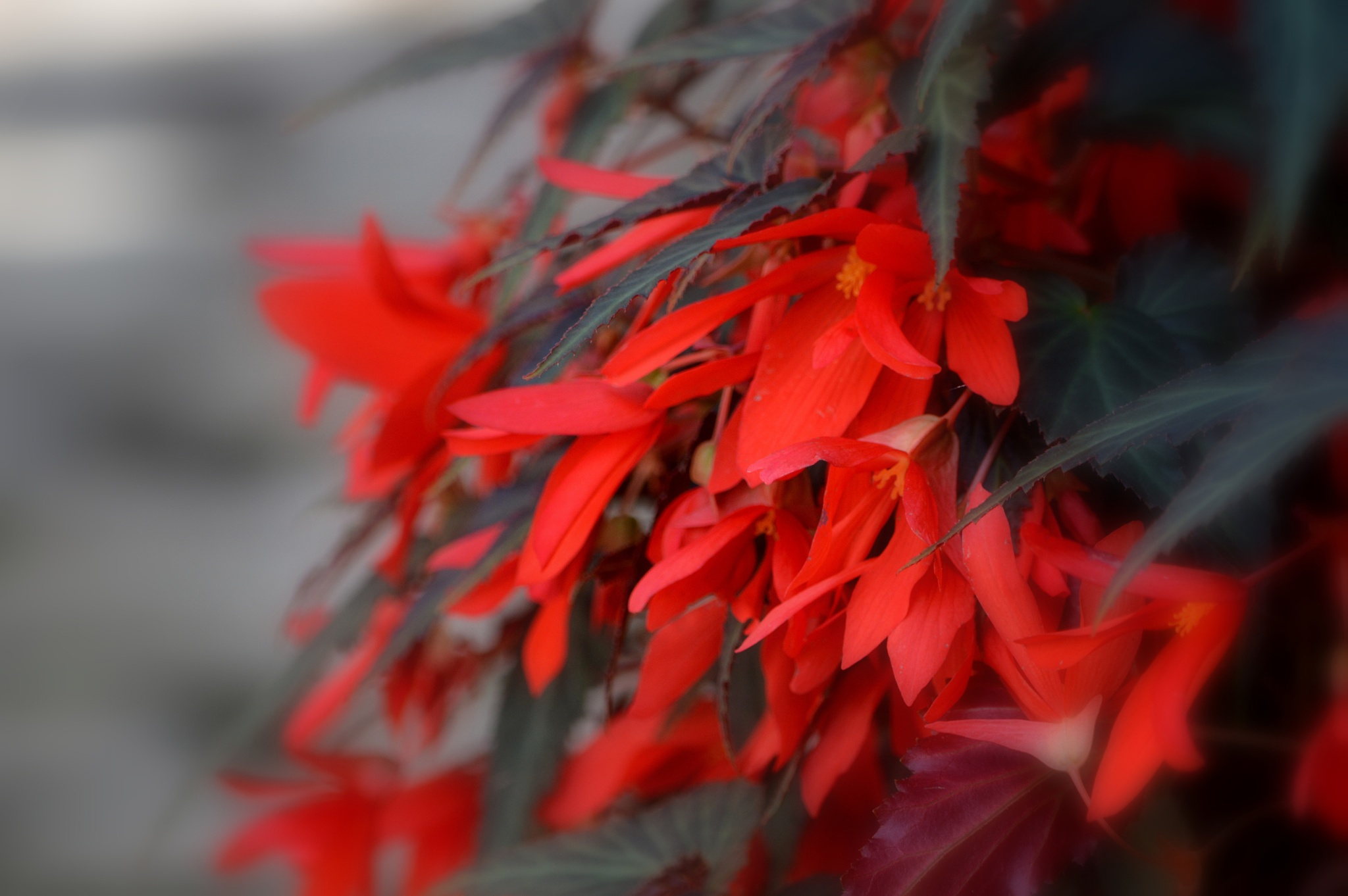Red flowers by Ludmila Shumilova
