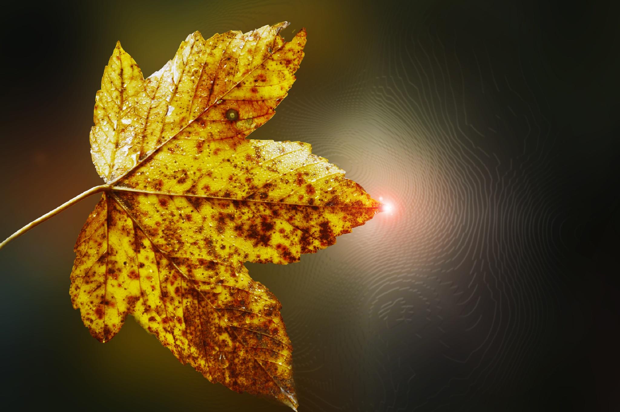 Yellow leaf by Ludmila Shumilova