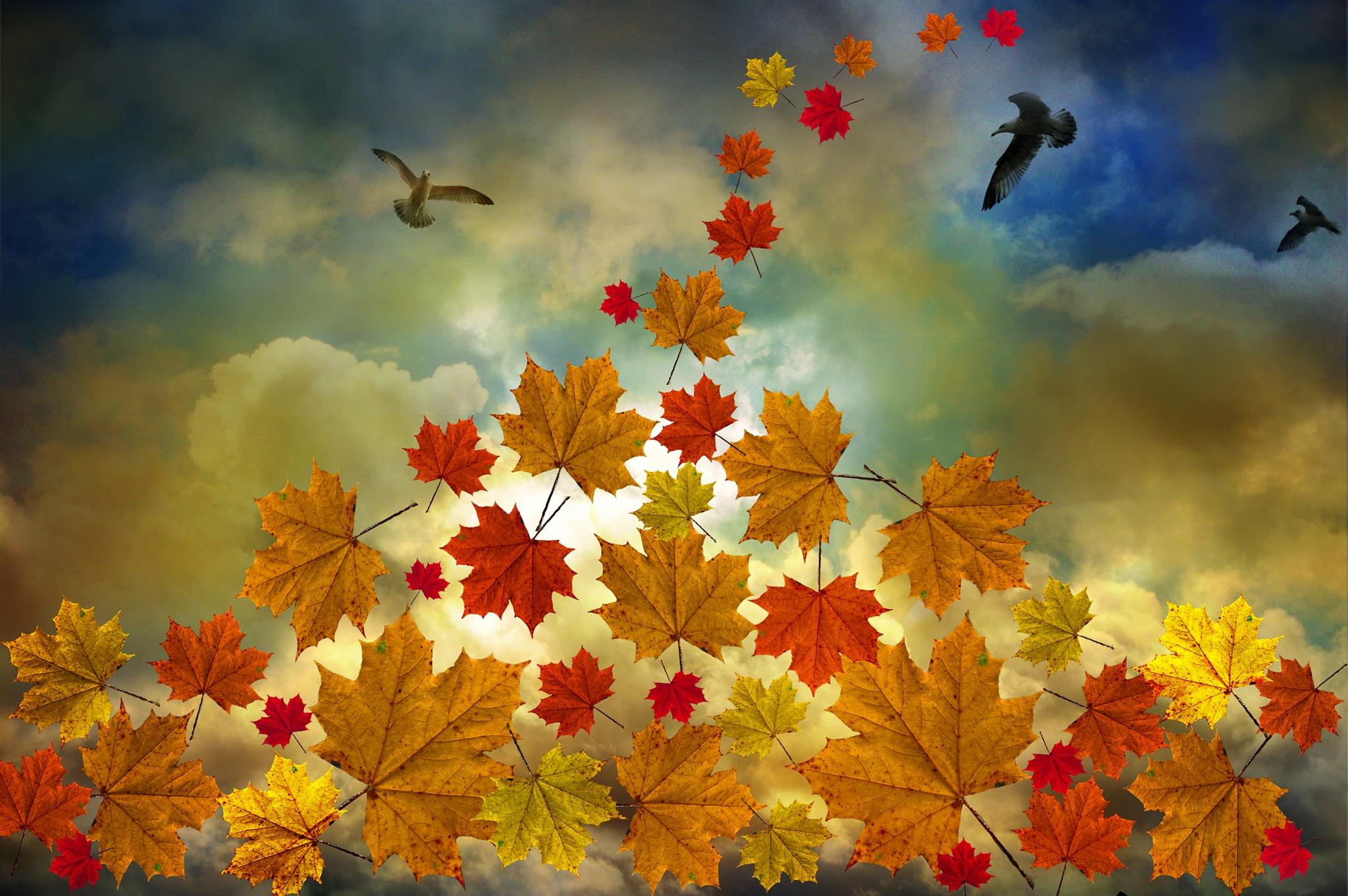 Hello, November by Ludmila Shumilova