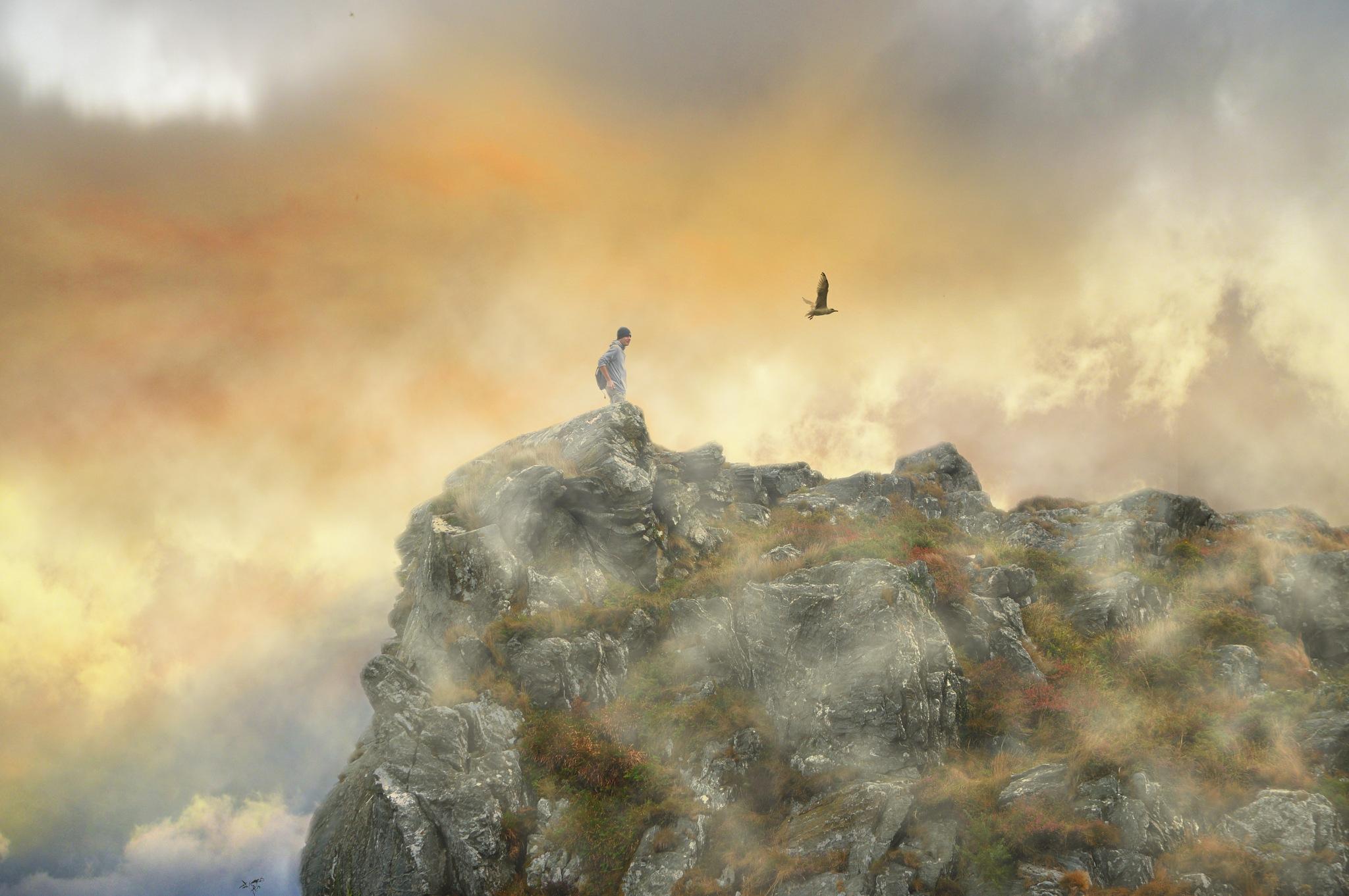 Follow the birds by Ludmila Shumilova