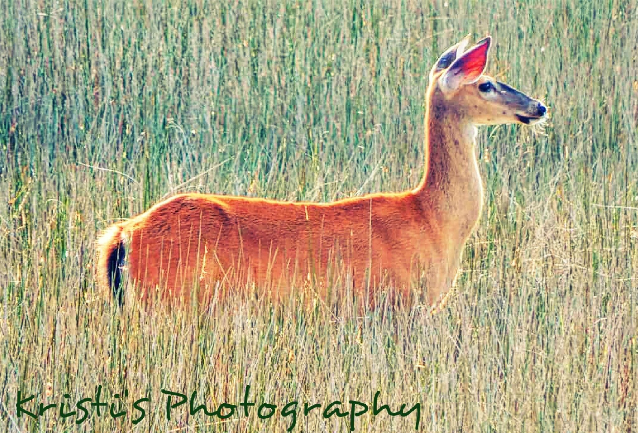 Deer looking yonder by Kristi Hepner