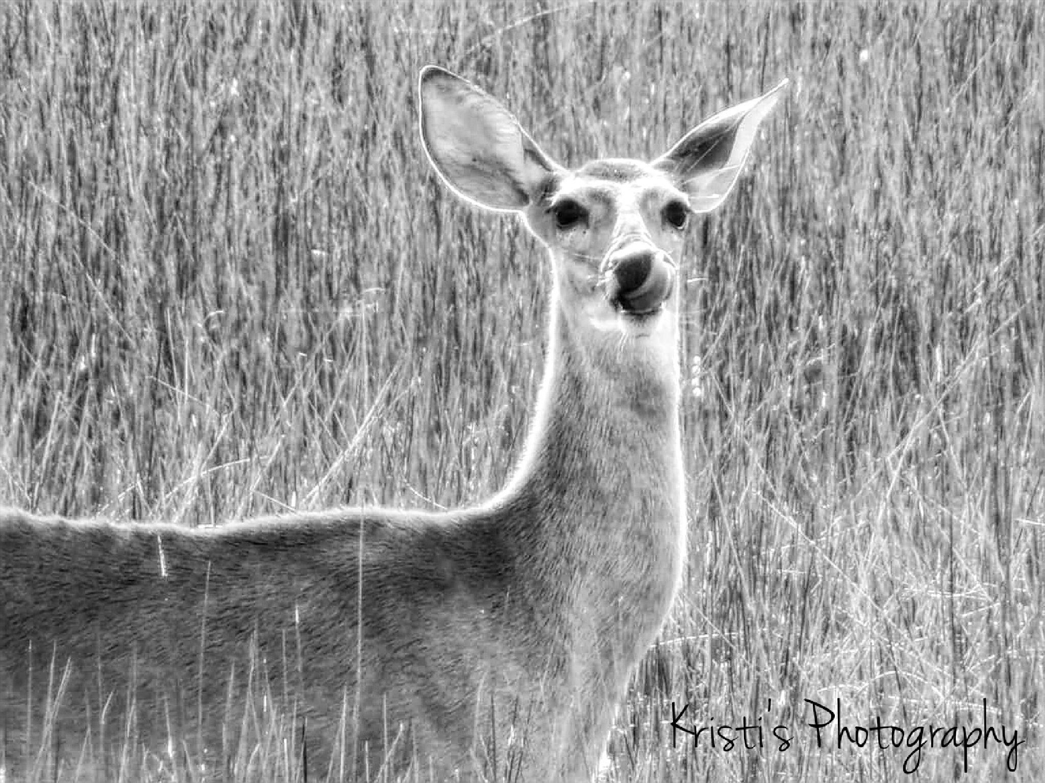 B & W Deer by Kristi Hepner