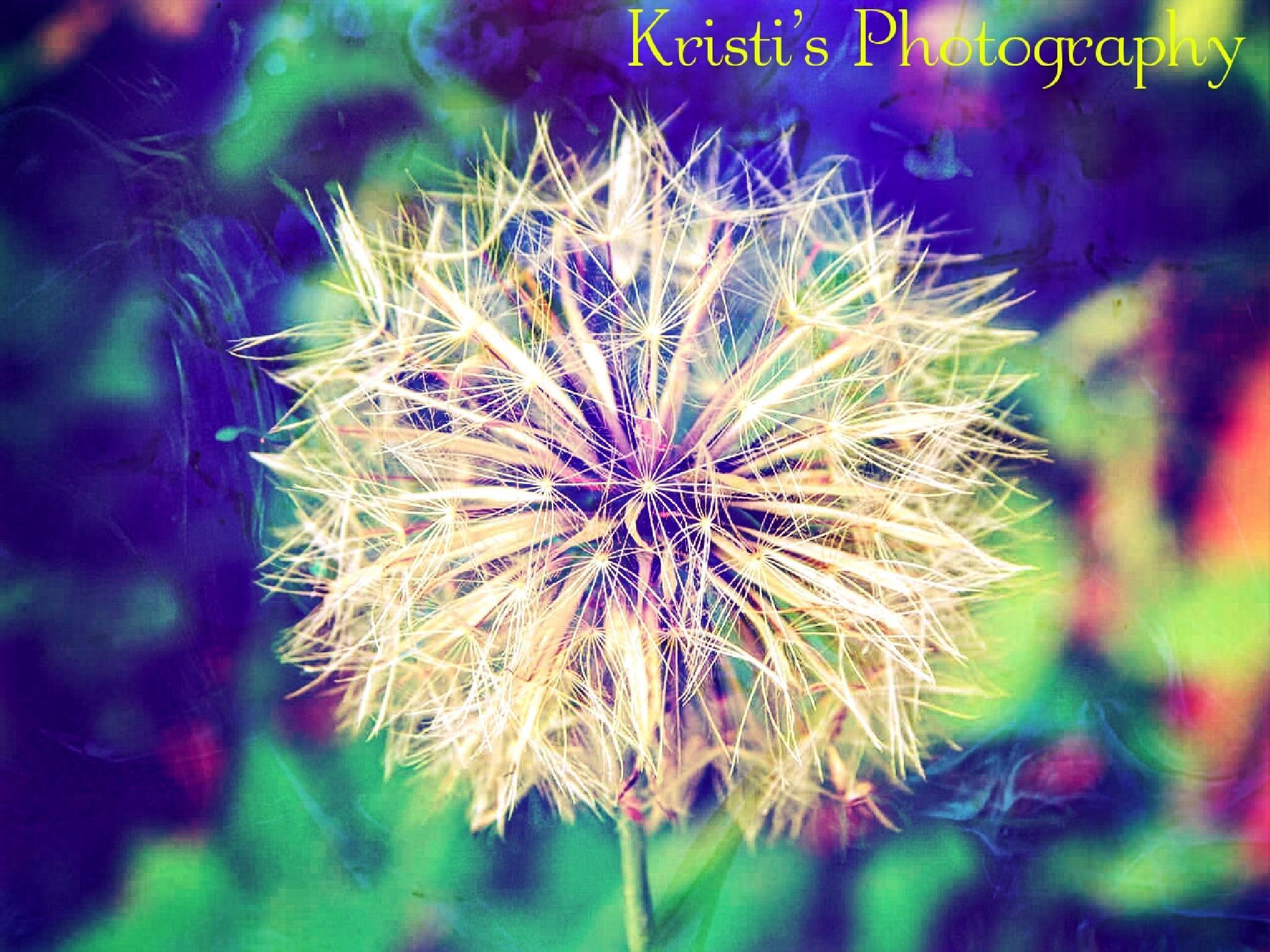 Dandelion by Kristi Hepner