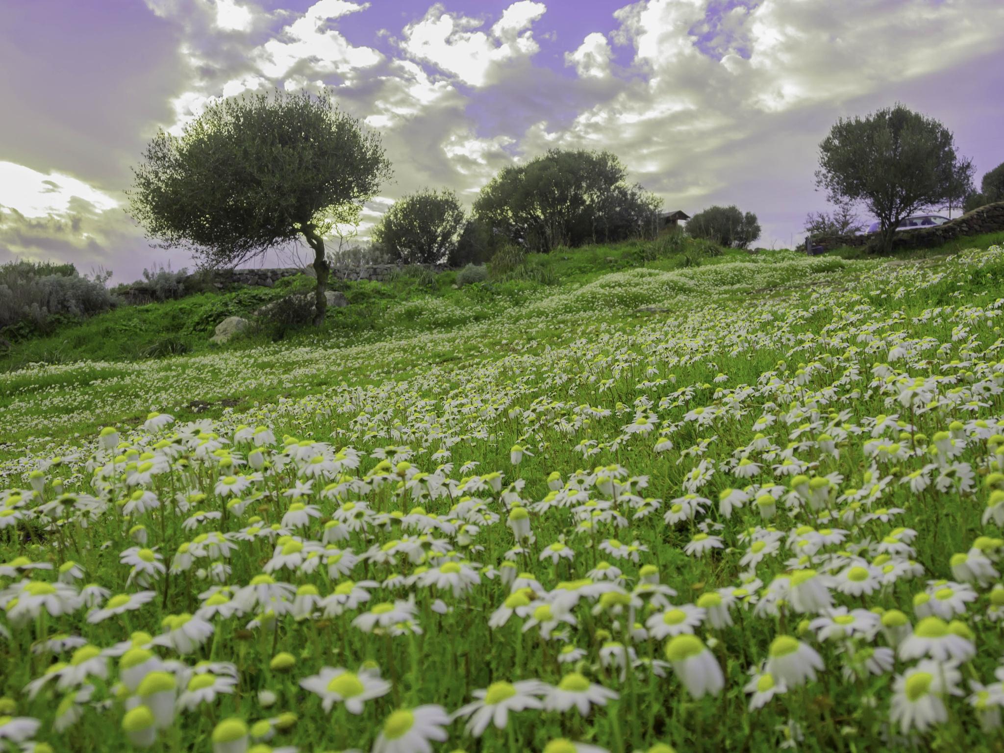 Primavera by Michele Pinna Marras