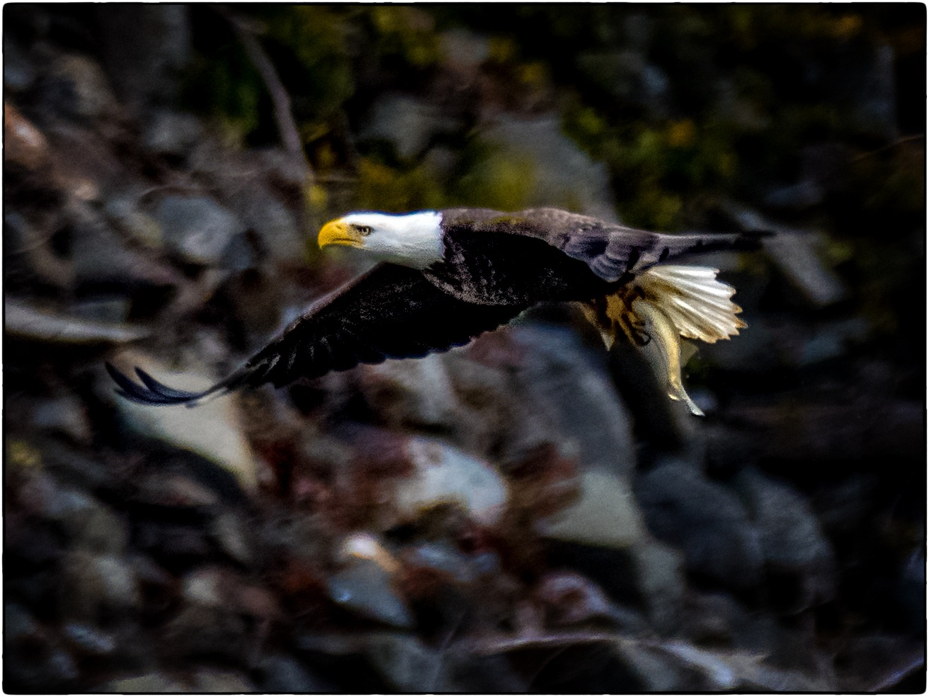 Eagle On The Rocks by stanlupo