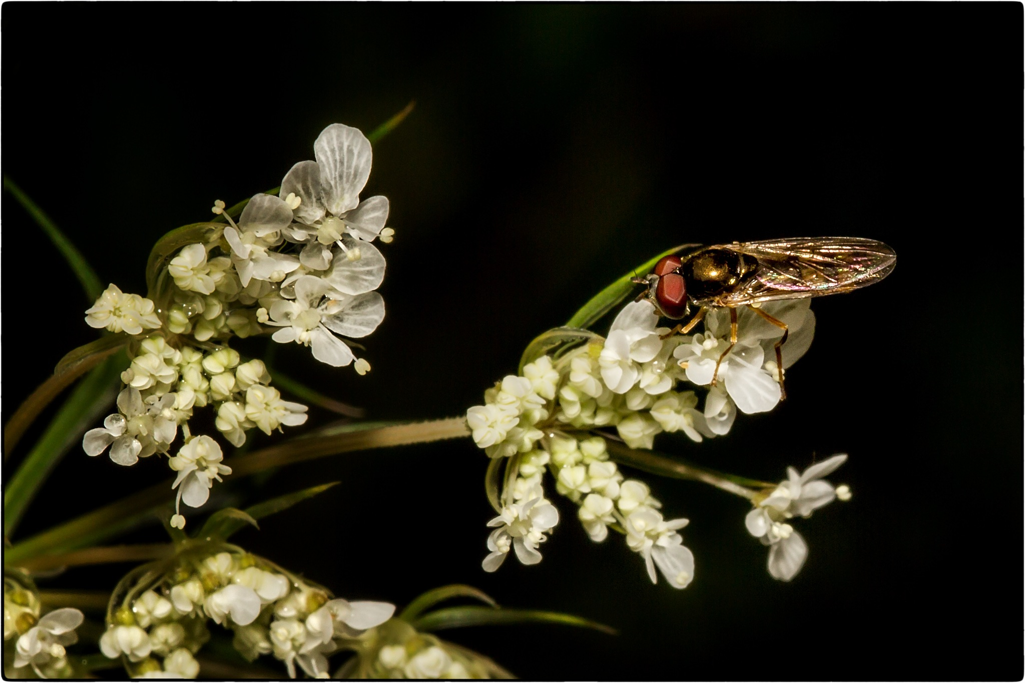 Flower and Fly by stanlupo