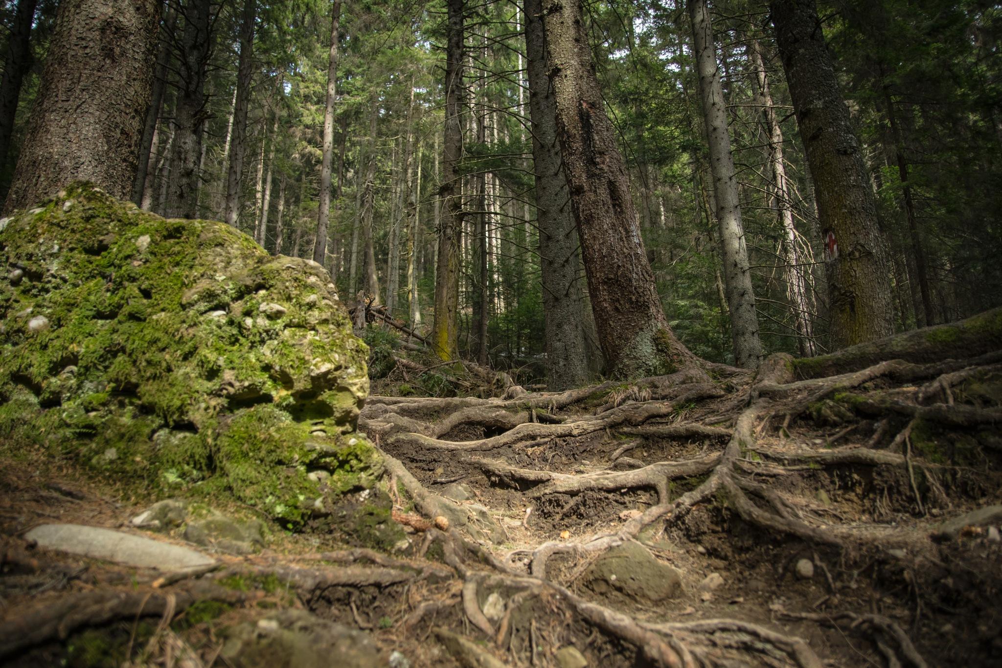 Roots by Marius Rusu