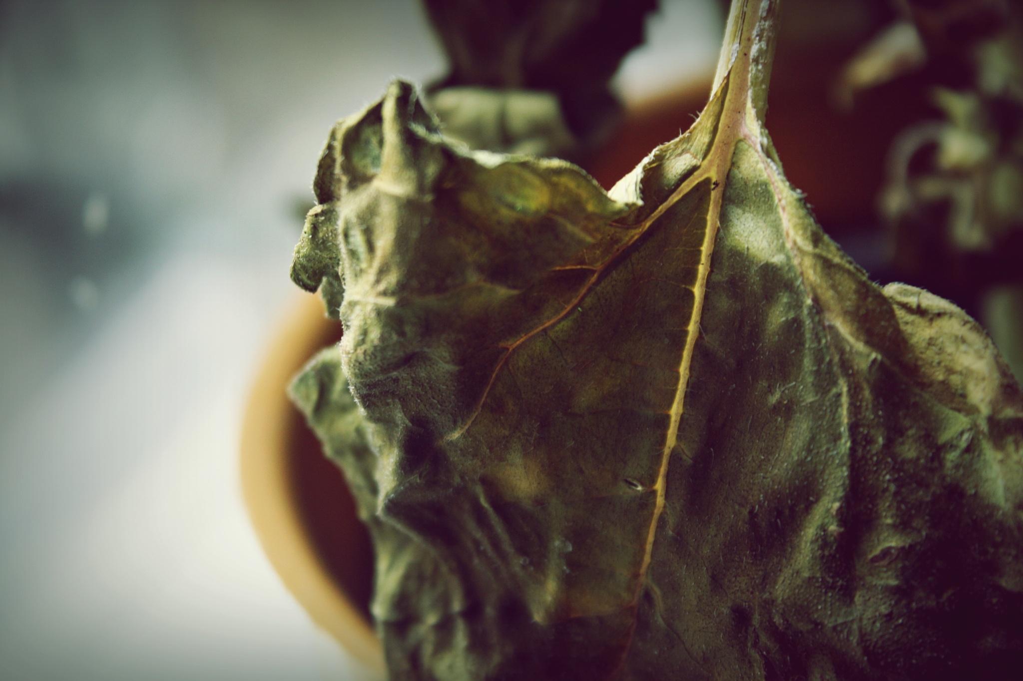 Sunflower leaf by Crismik