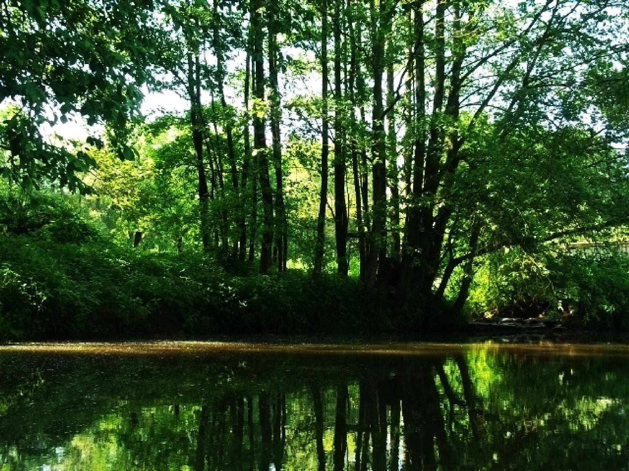 A wonderful summer by Crismik