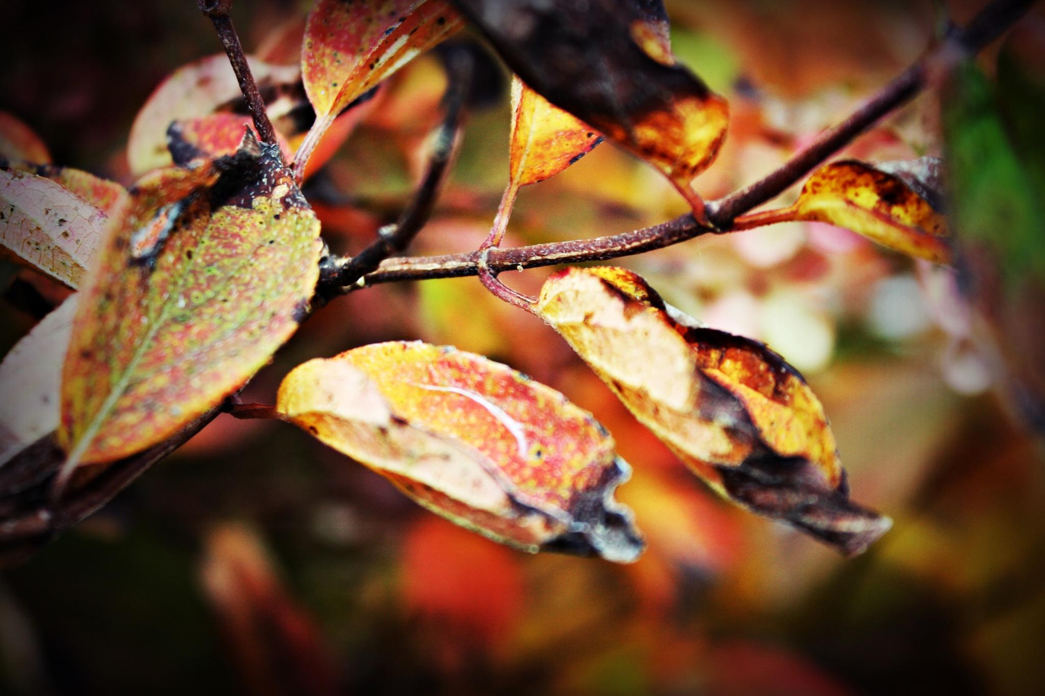 Autumn colors... by Crismik