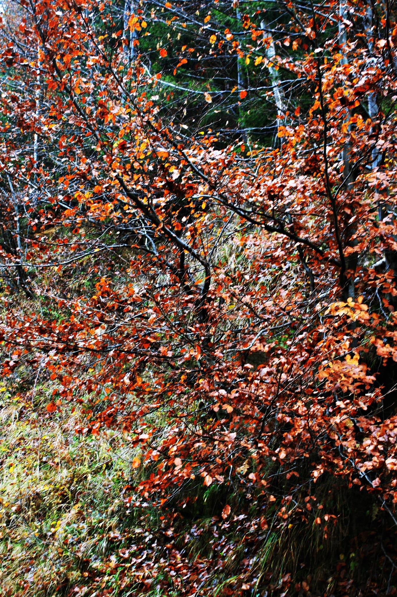 Autumnal forest 4 by Crismik