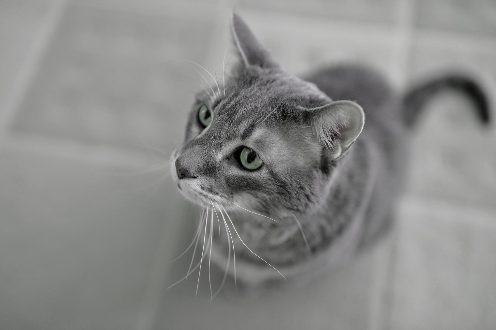 Cat by David Lam