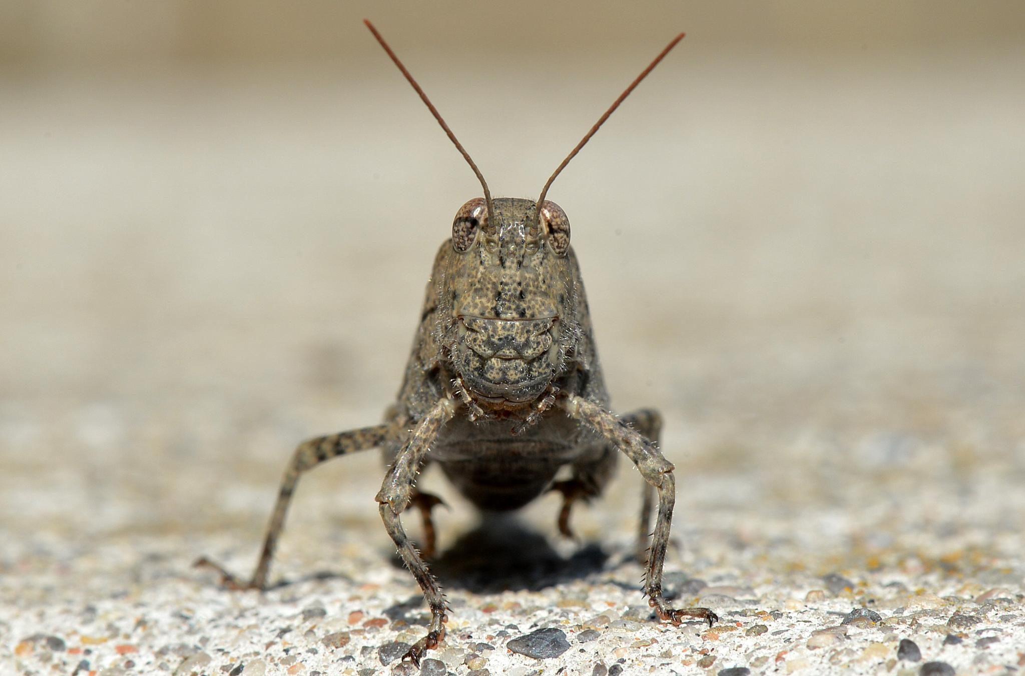 Grasshopper by David Lam