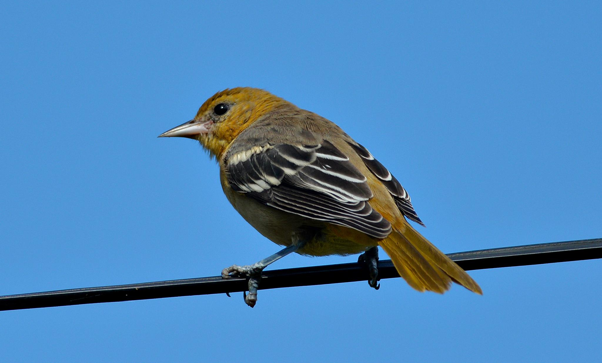 Bird by David Lam