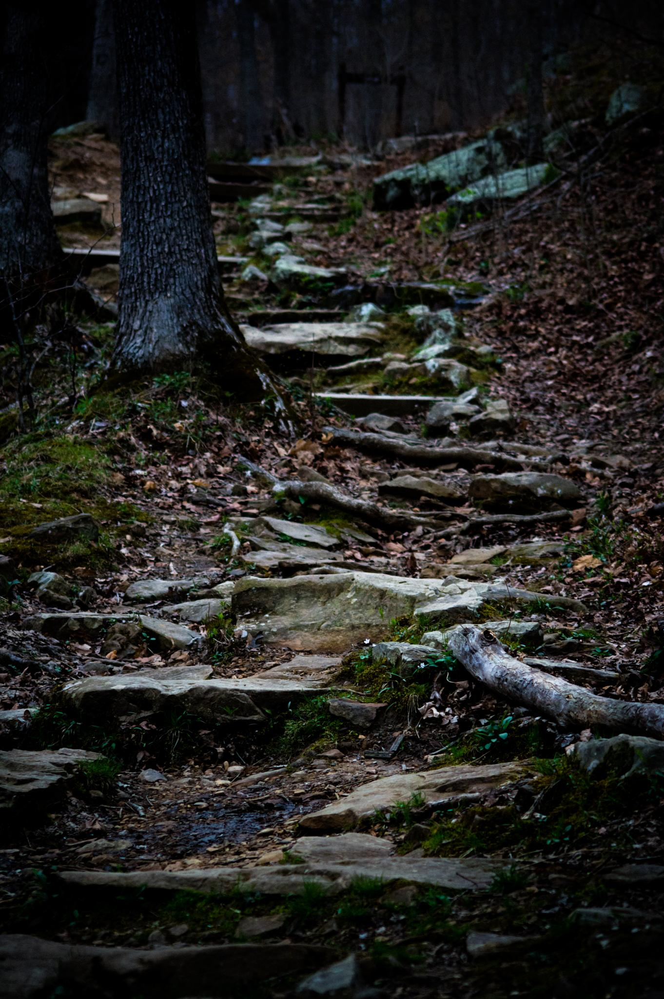 The Path Up by Melissa Norman