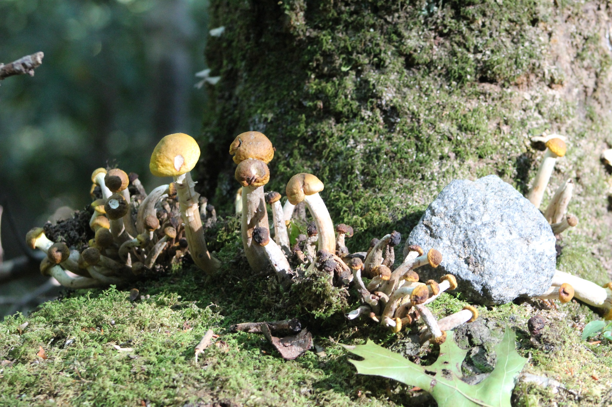 fairy village by MORCINDERS