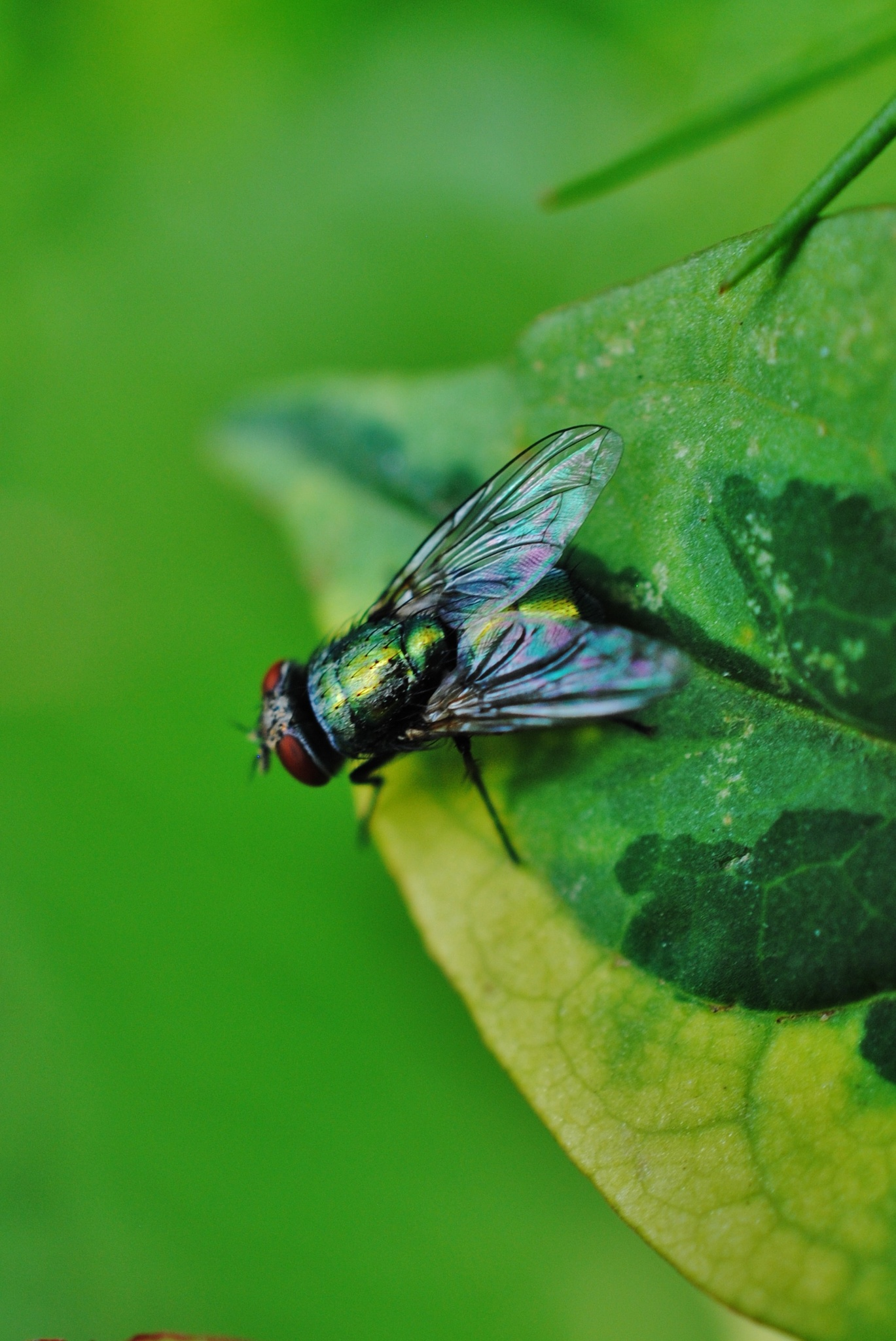 I never thought flies would be so colourful.. by Renee Norton