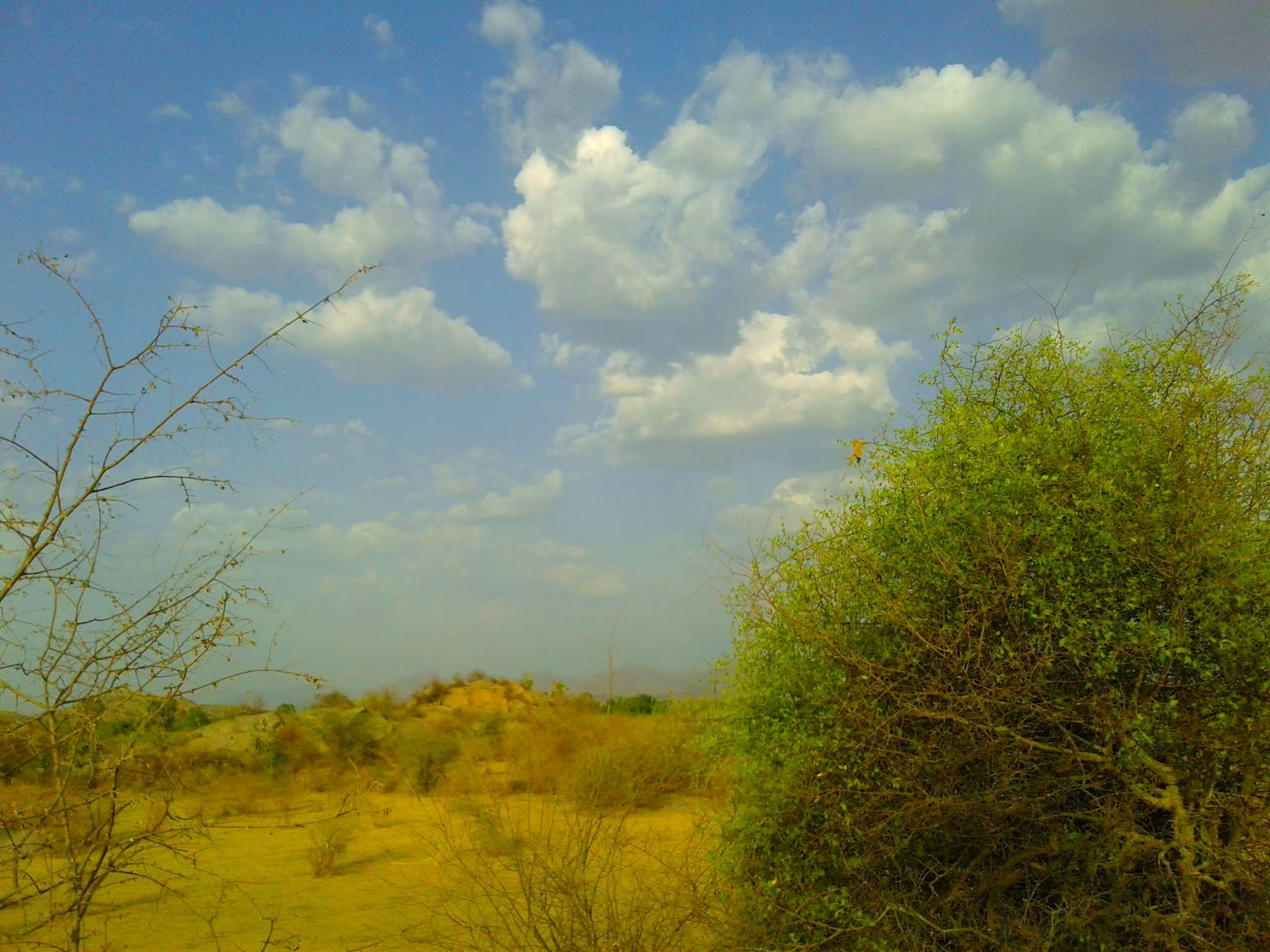 Untitled by Gajendra Singhvi