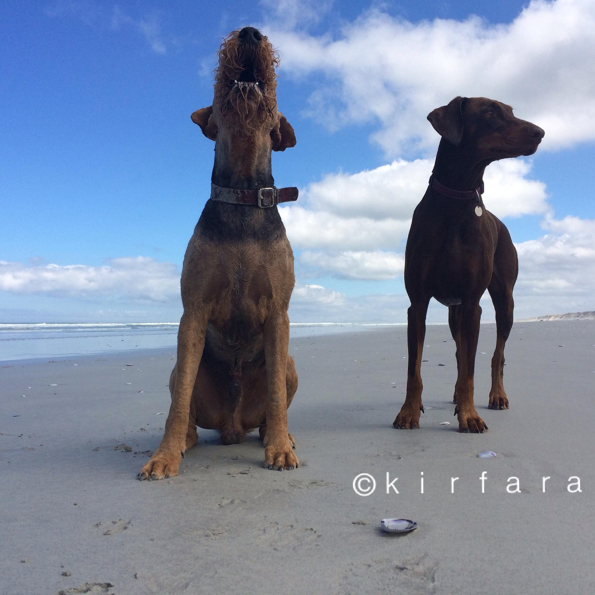 West Coast Explorers by kirsten.keun