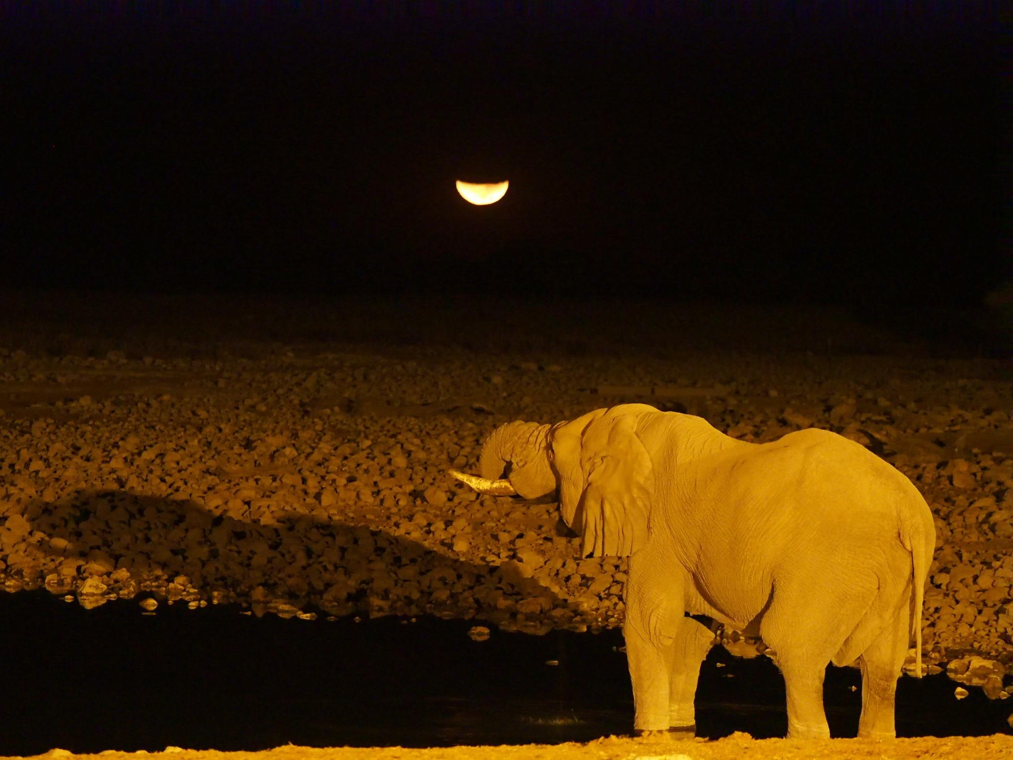 Protect Elephants  by kirsten.keun