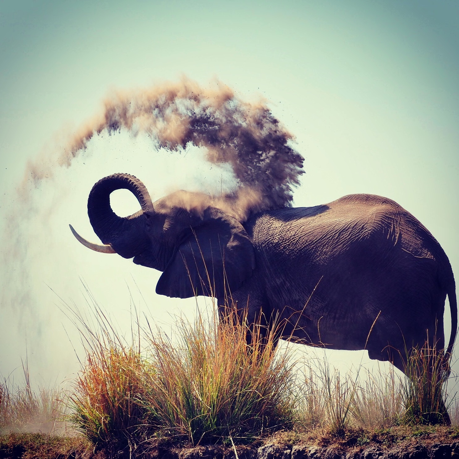 Dust bath  by kirsten.keun