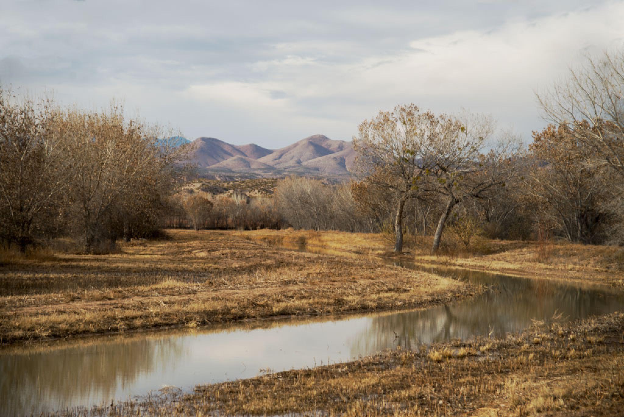bosque del apache by marianne troia