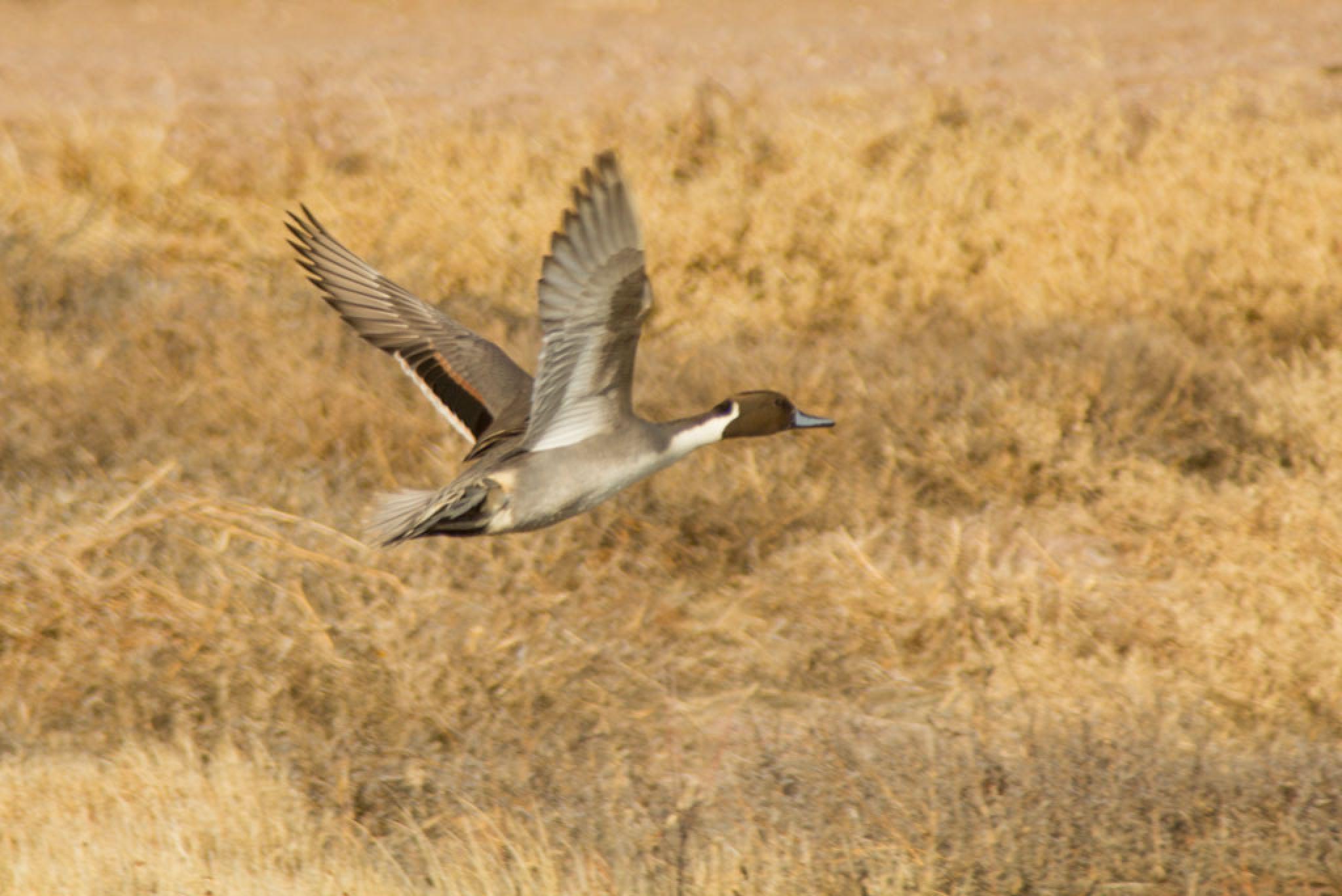 taking flight by marianne troia