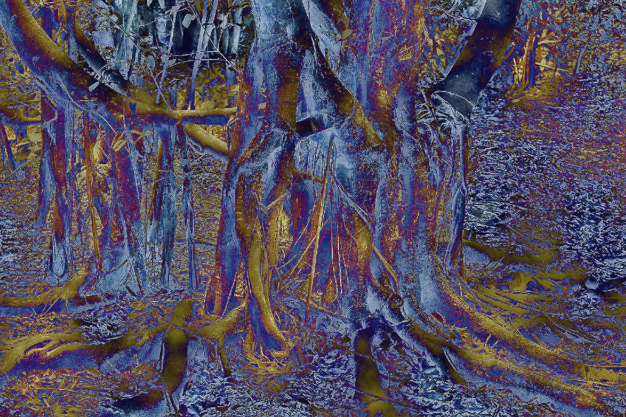 Tree Root Abstract by Lynnie taylor