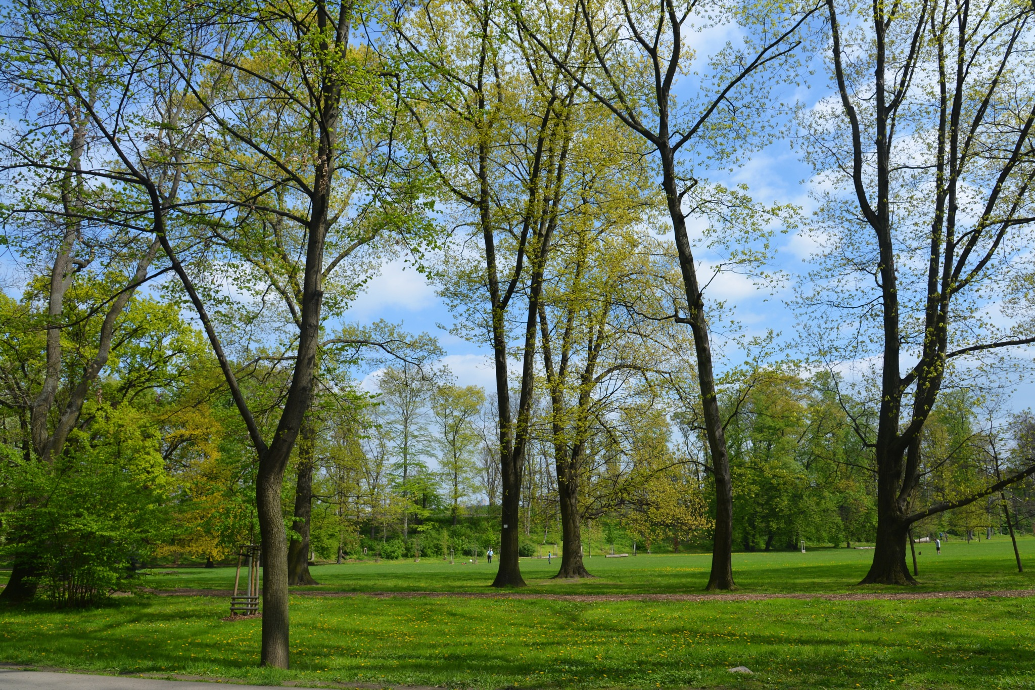 Beauty of Spring Park. by marcel cintalan