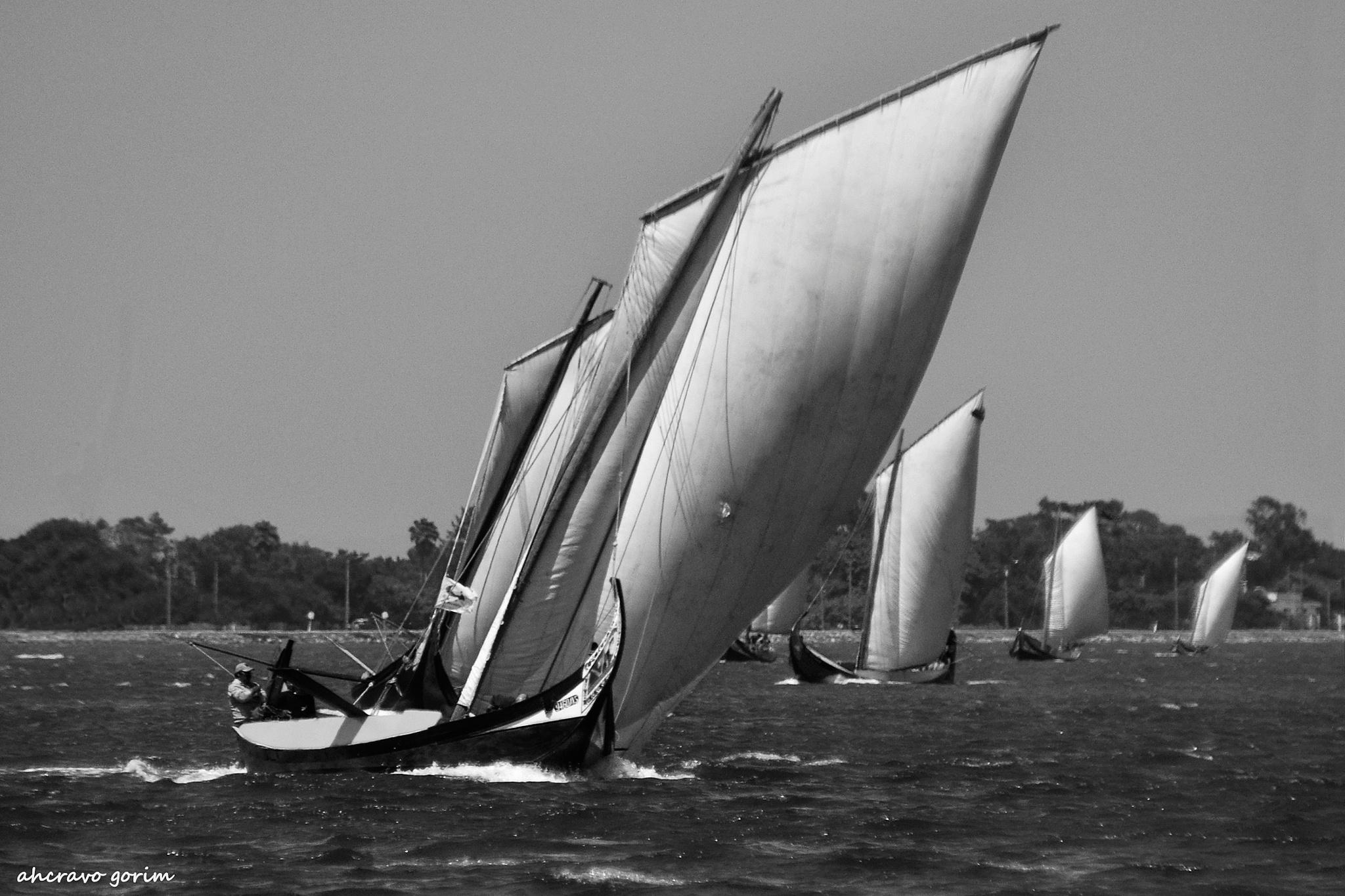 sailing for victory by ahcravo gorim