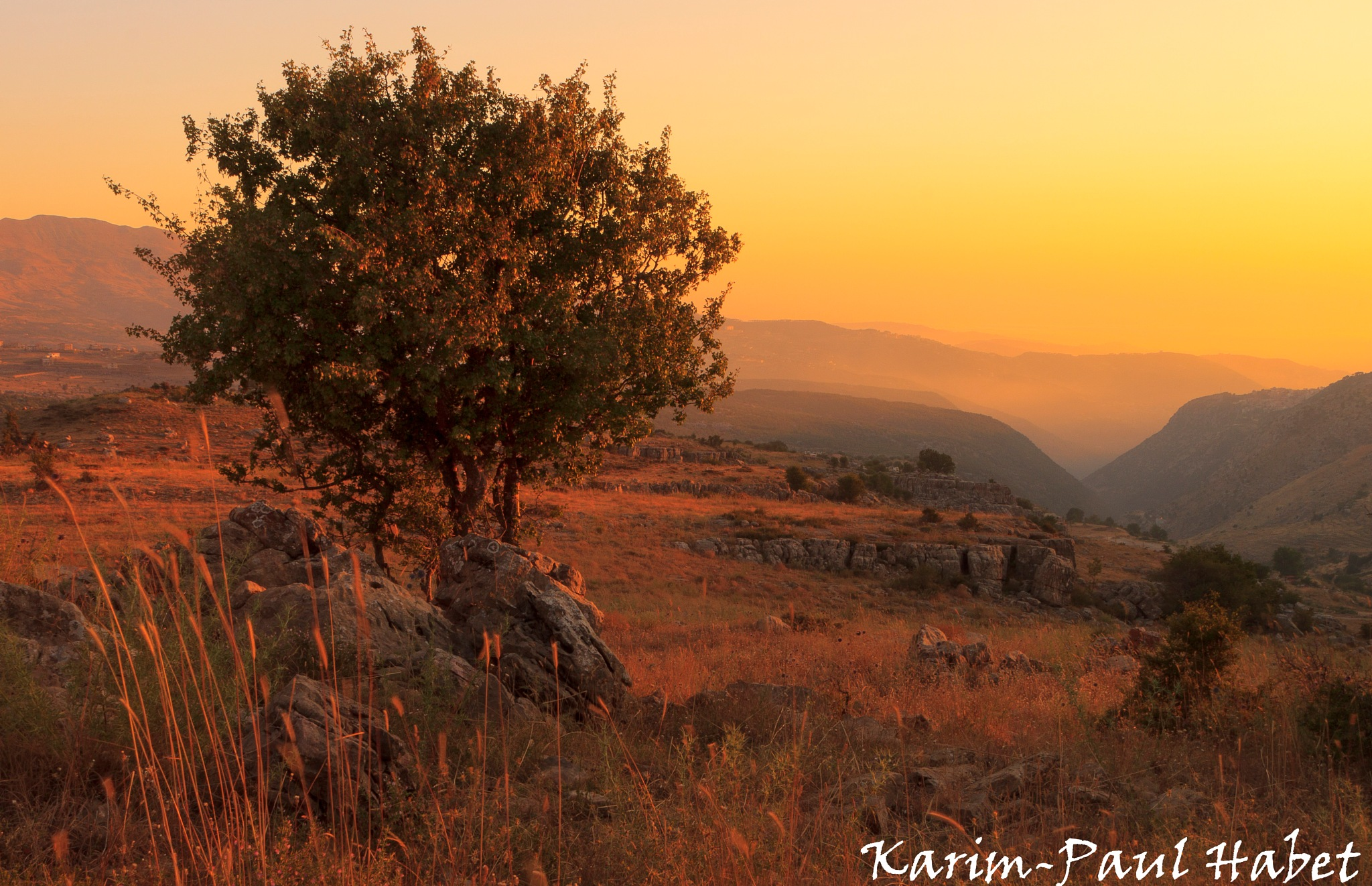 Maple Tree in a Warm afternoon sunset / Erable au coucher du soleil by Karim-Paul Habet