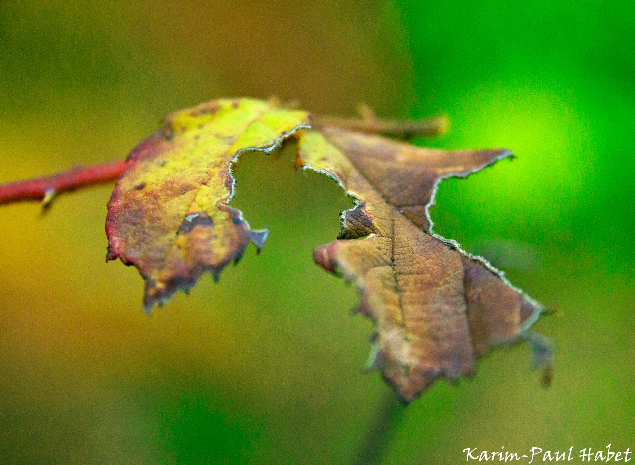 When Winter leafs will start to fall 2 by Karim-Paul Habet