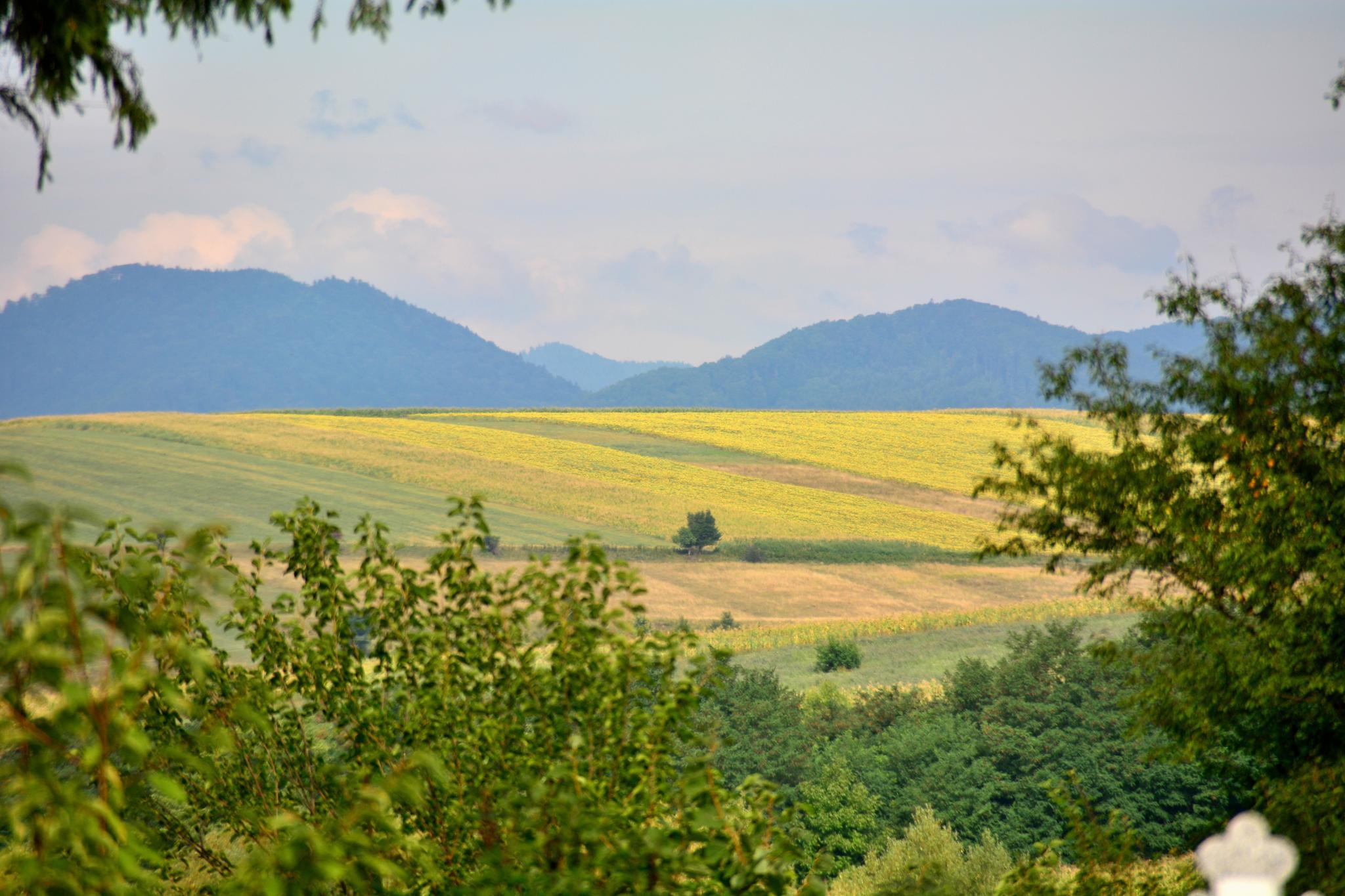 Landscape by Silviu Calistru