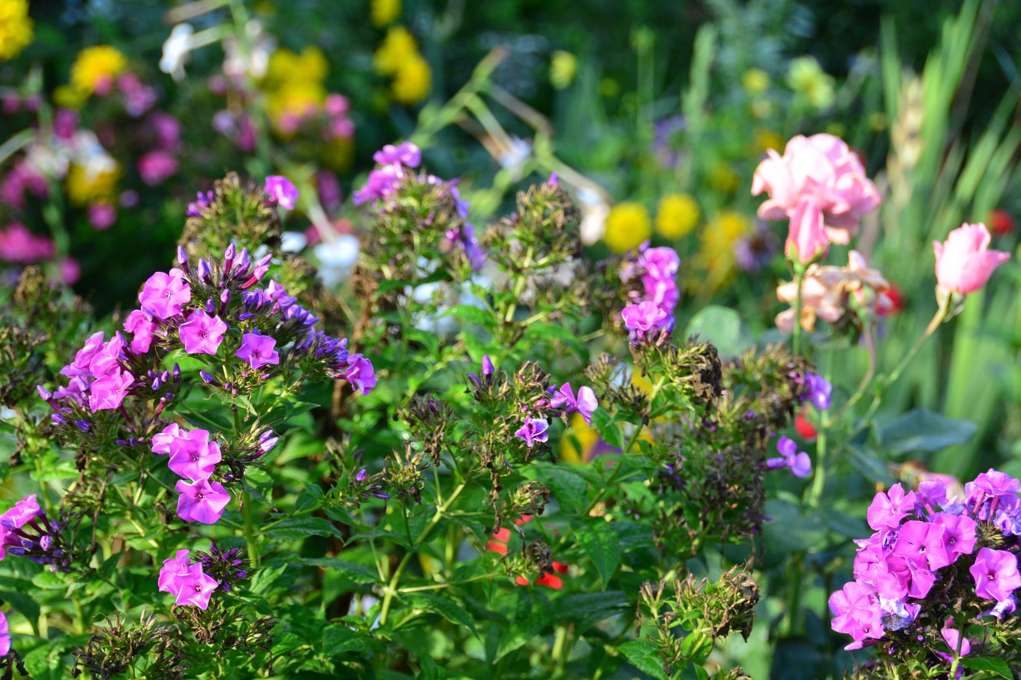 A lot of flowers by Silviu Calistru